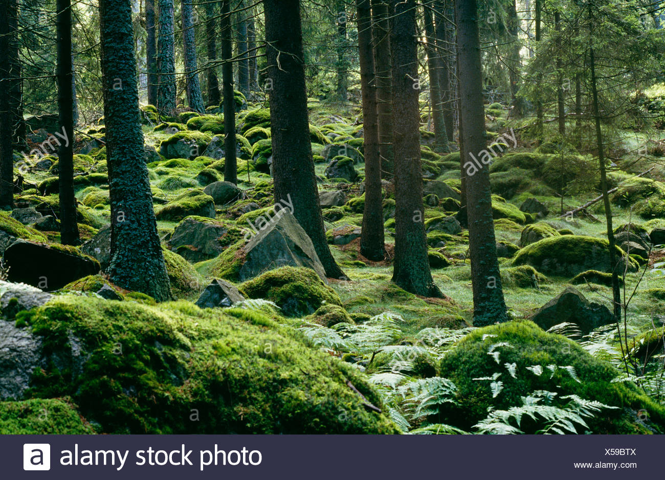 View of moss covered forest - Stock Image