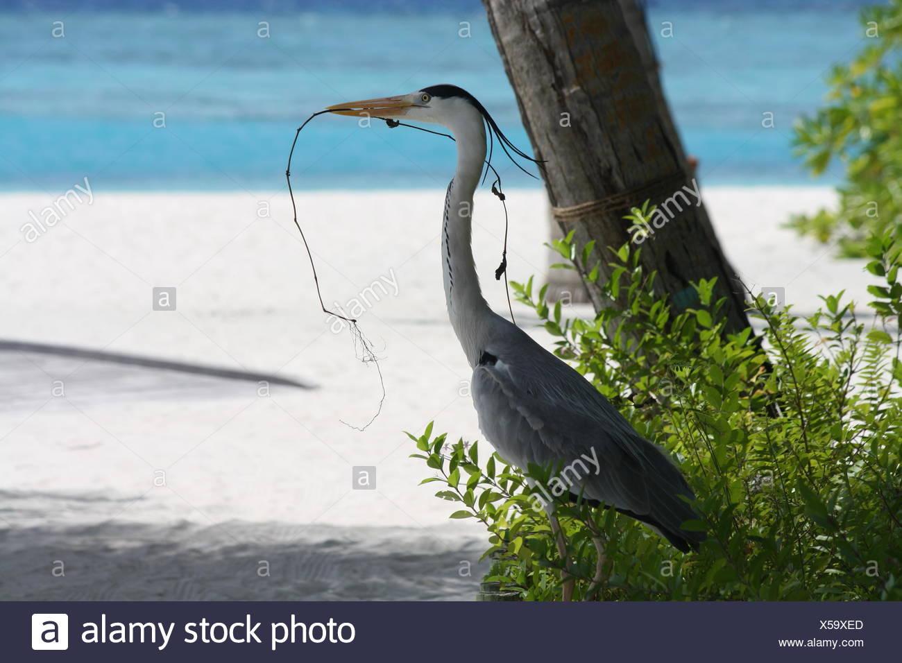Bird Under Tree Holding Twig - Stock Image