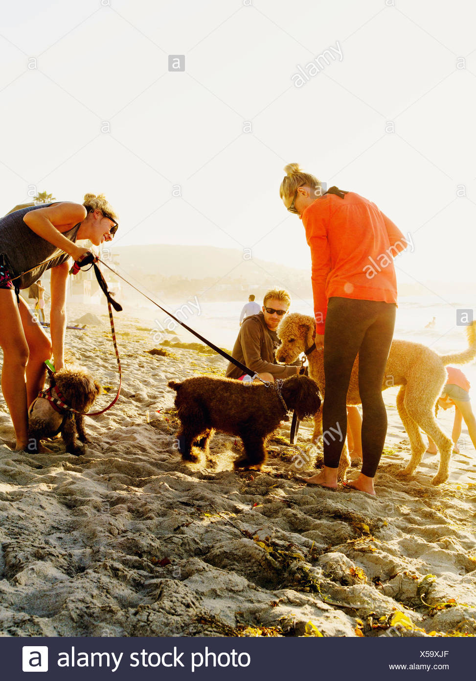 Beach goers with their loving pets meet on Laguna beach California. Stock Photo