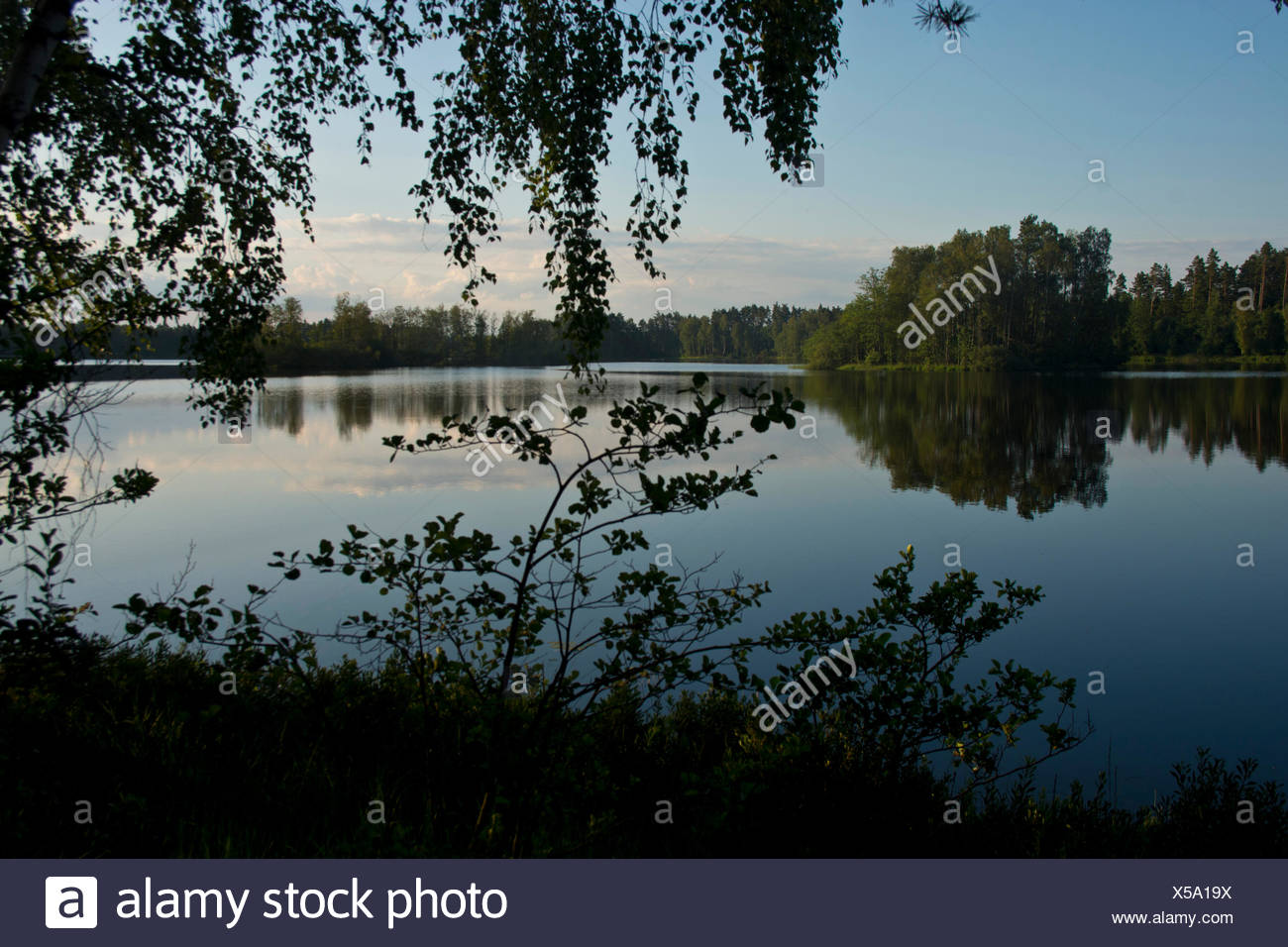 Sweden, Europe, Smaland, Markaryd, Store Sjö, lake, shore, trees, summer, islands, - Stock Image