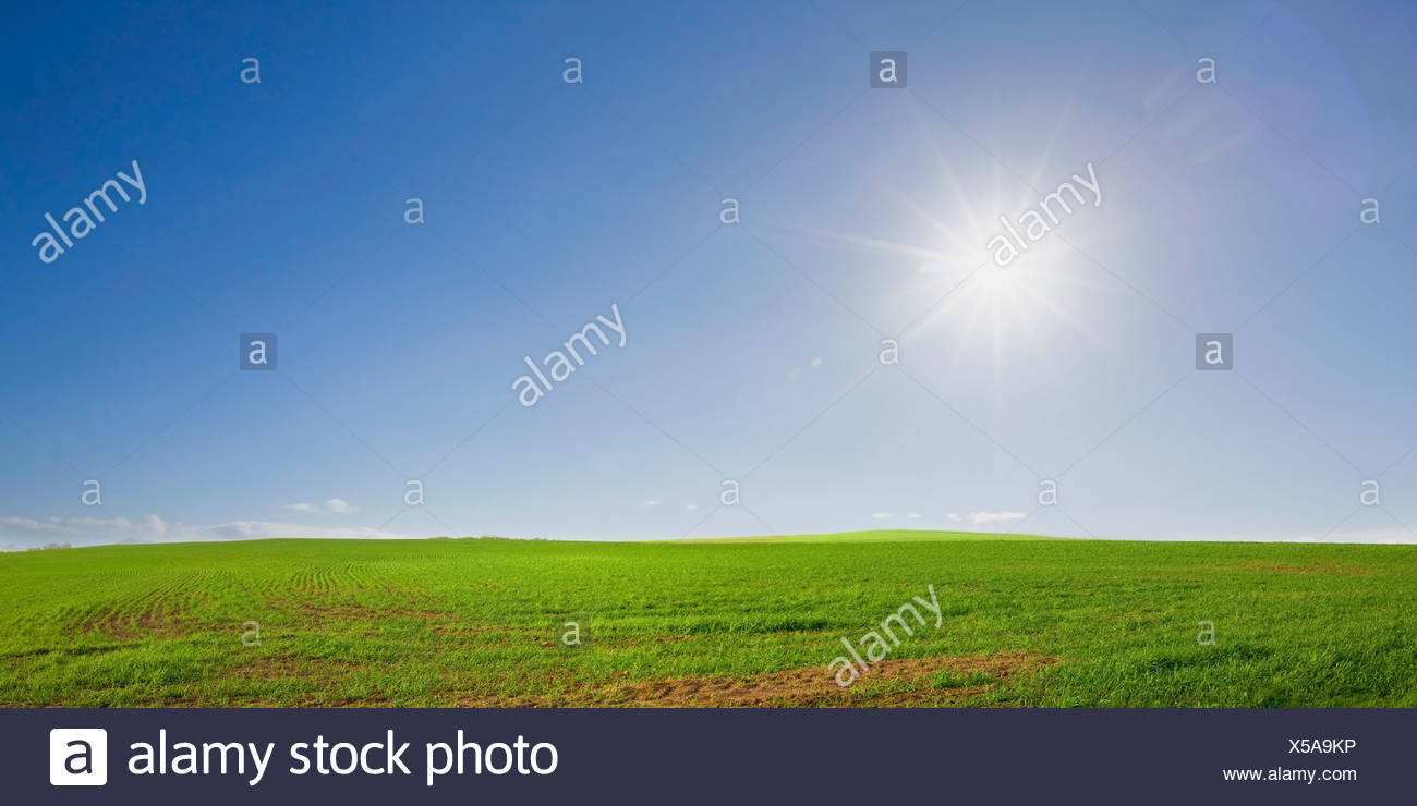 Lush farm meadow on bright morning, Swartland, South Africa - Stock Image