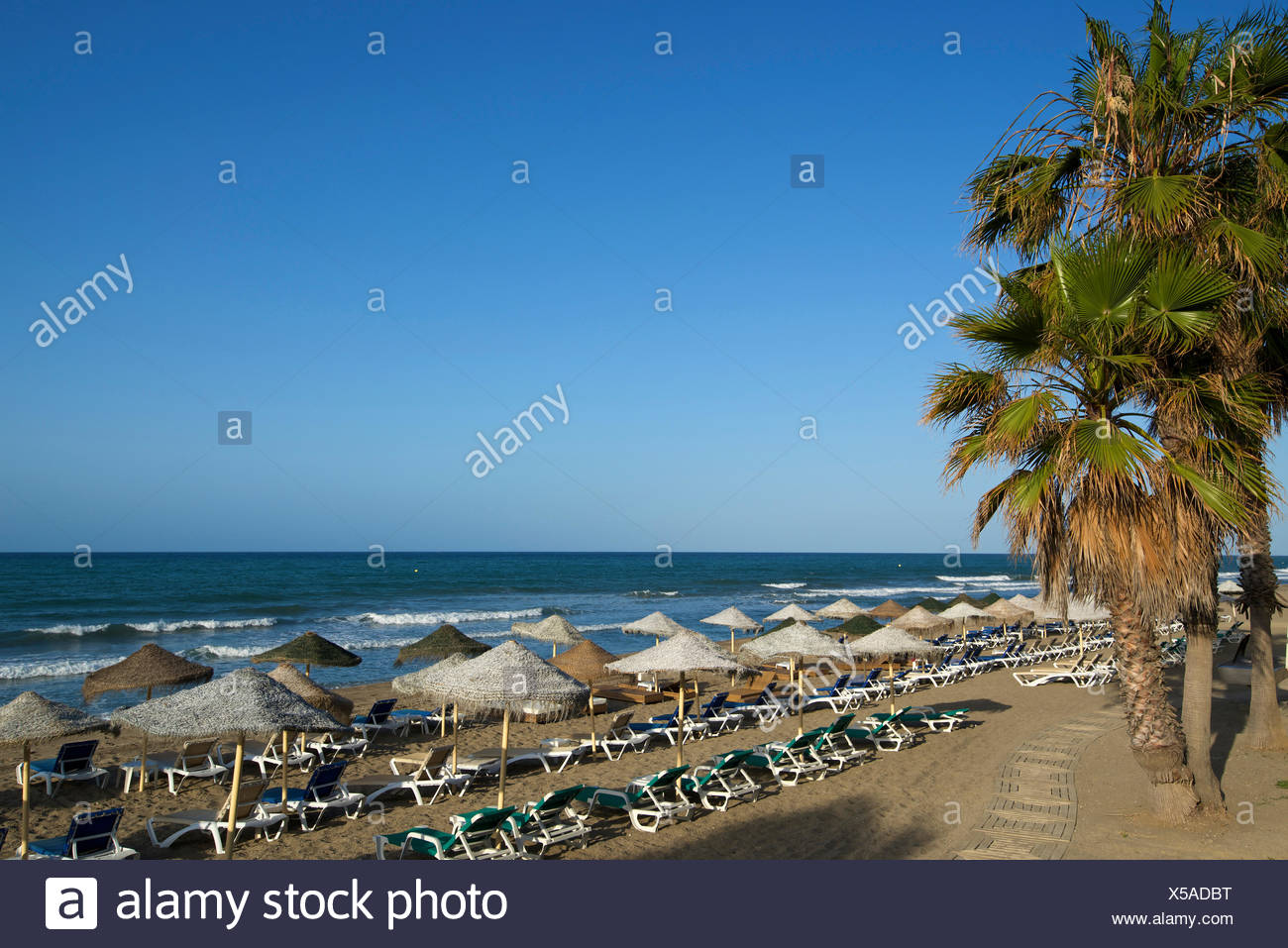 Andalusia, Spain, Europe, outside, day, Marbella, Costa del Sol, palm beach, beach, seashore, palm, nobody - Stock Image