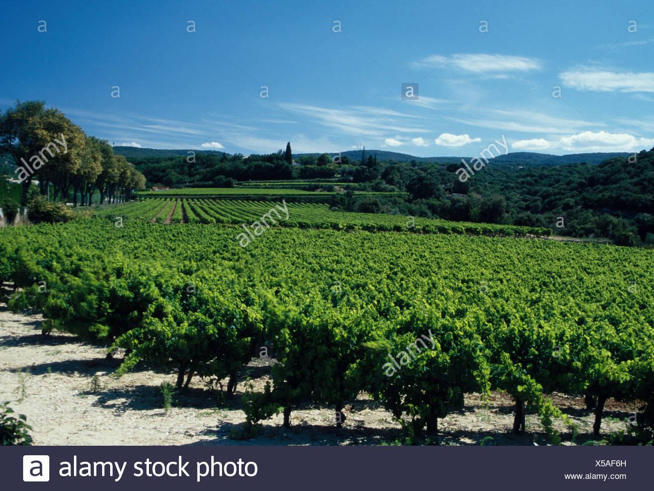 433eed47001893 Farming Vineyards Vineyard Ardeche region South France - Stock Image