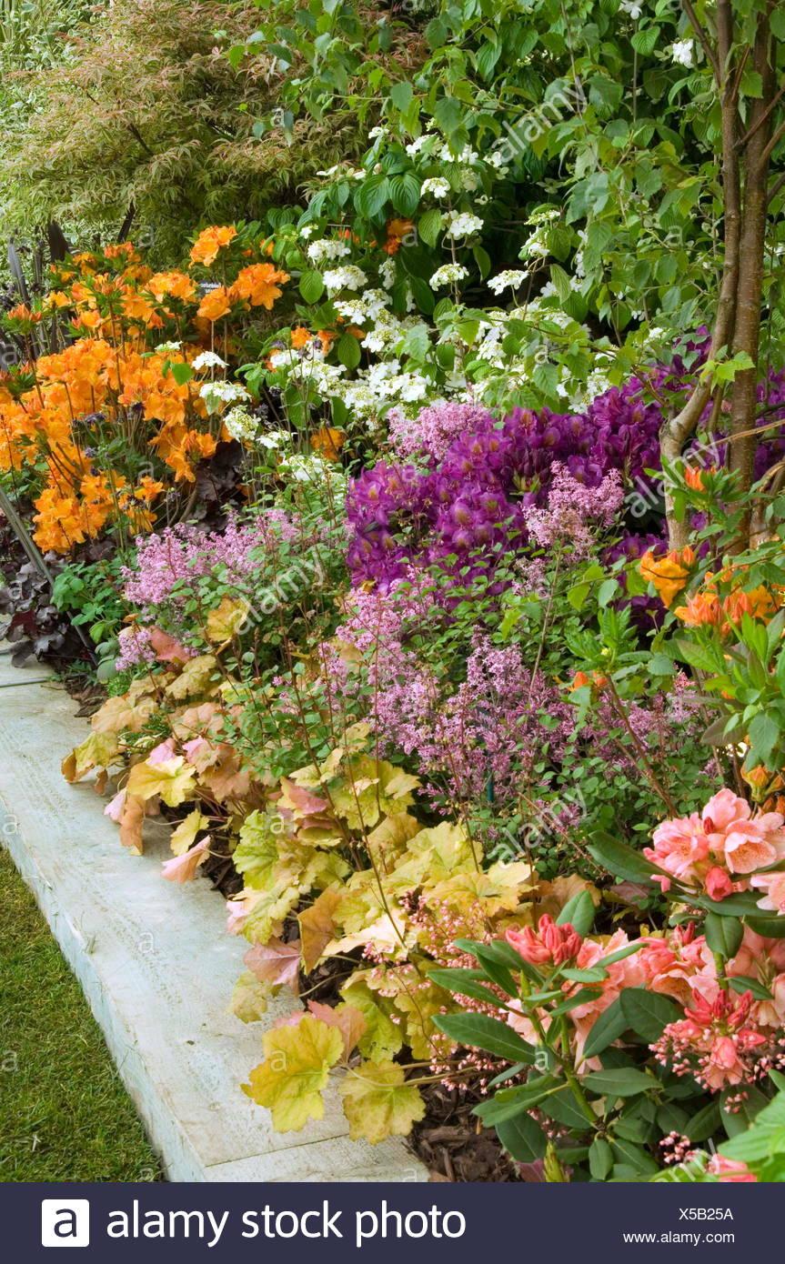 Colourful mixed border on Hillier Nurseries exhibit.  Chelsea flower show 2008.    Date: 21.05.2008  WAR000281  COMPUL Stock Photo