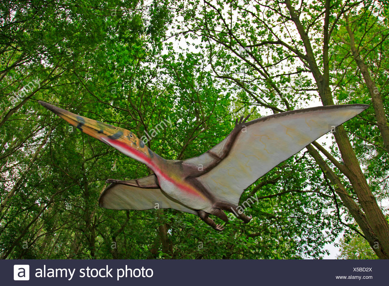 Pterodactylus (Pterodactylus), flying in a forest - Stock Image