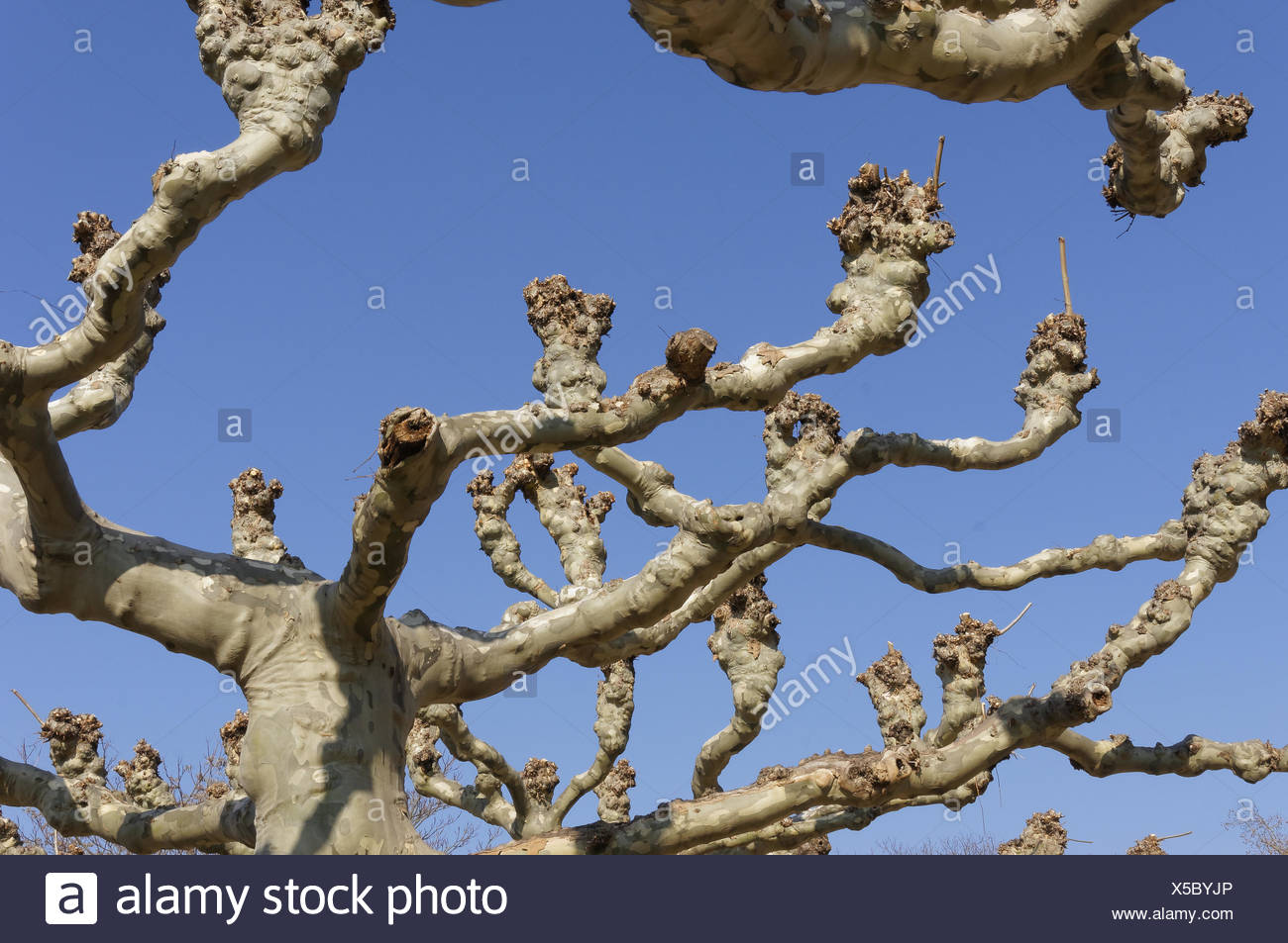 Tree views - Stock Image