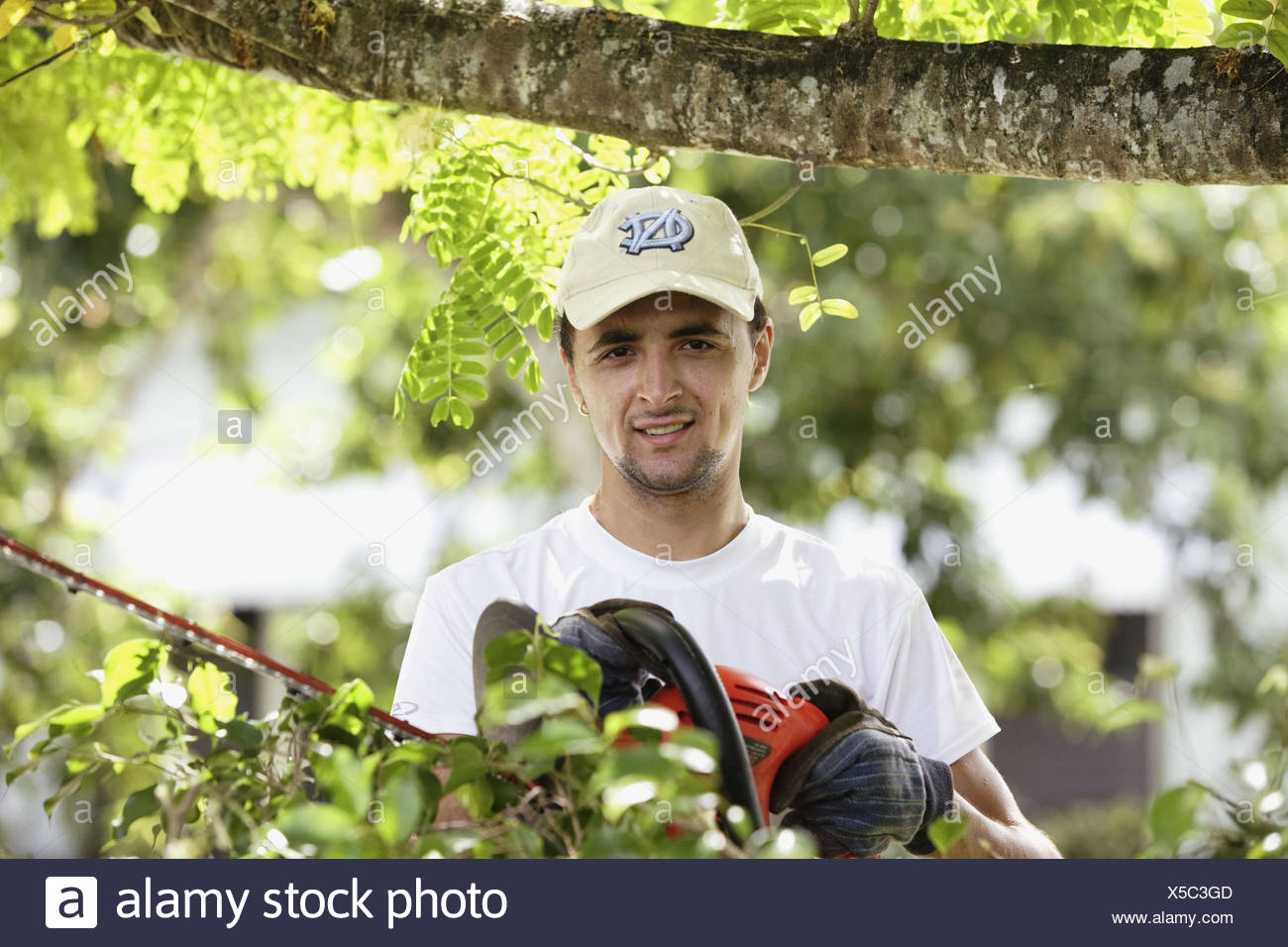 Man cutting a hedge with a trimmer - Stock Image