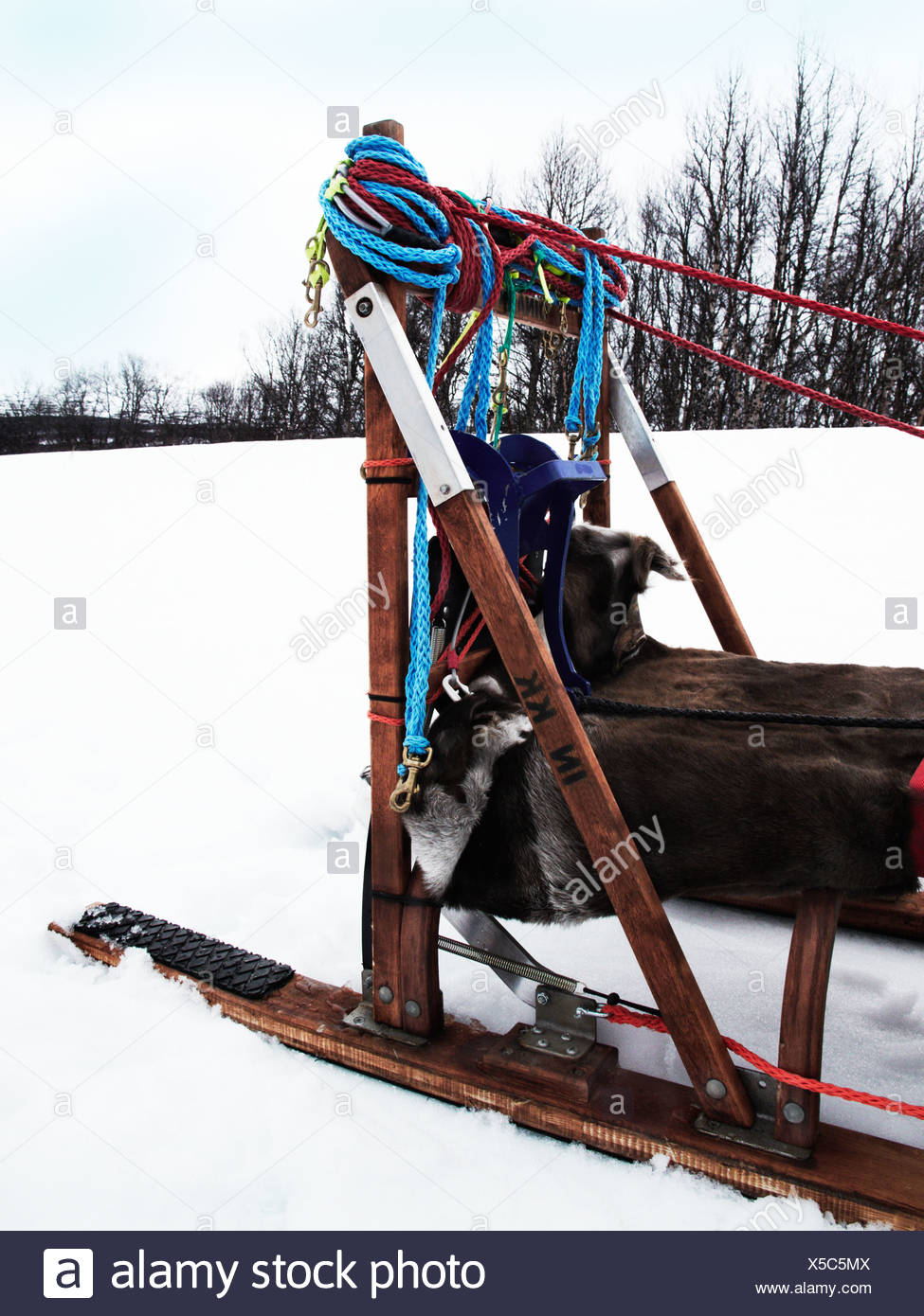 A dog sledge in the snow, Sweden. Stock Photo