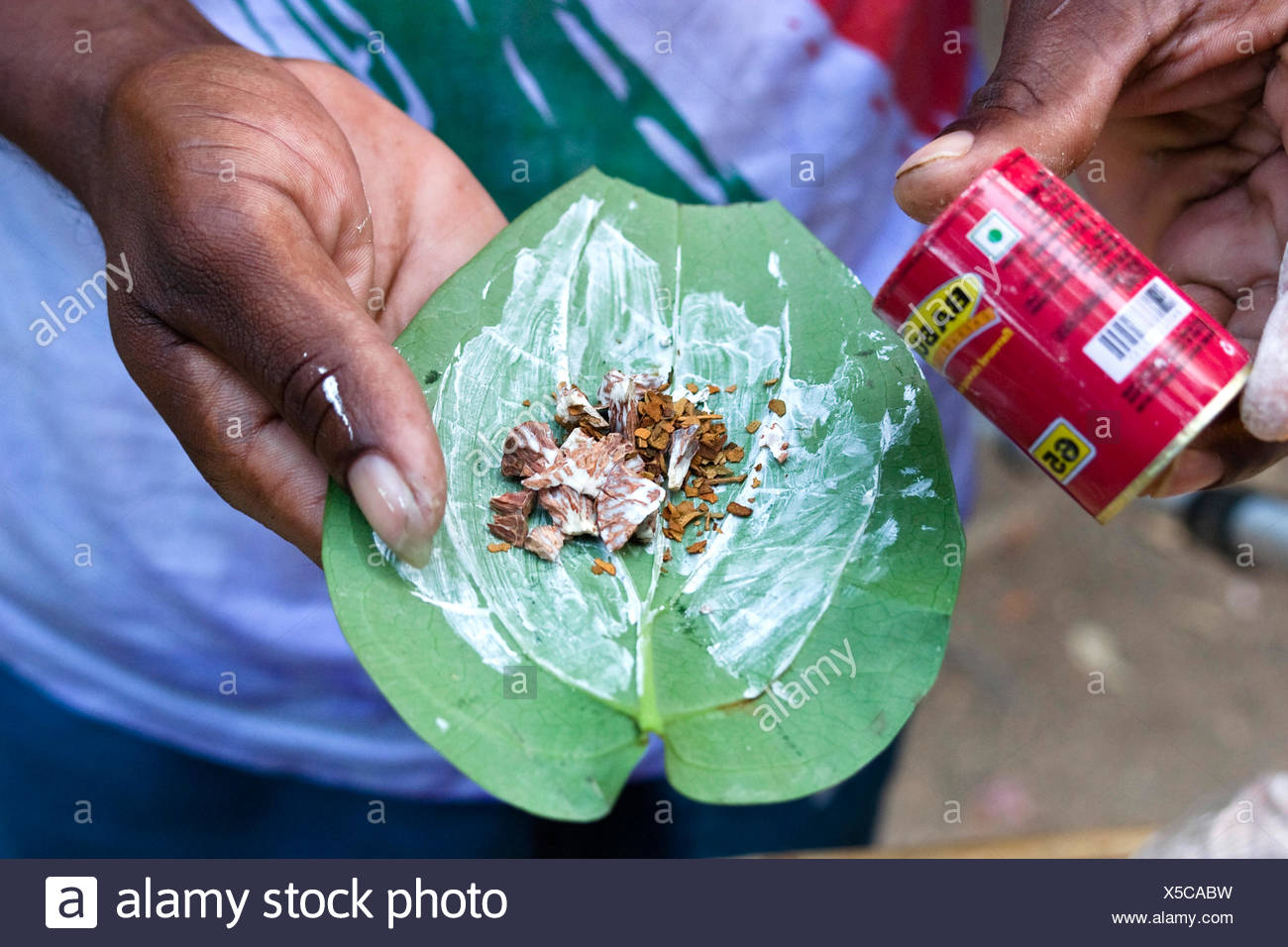 betel palm (Areca catechu), betelnut, Areca catechu; with quicklime on betelpepper leaf Piper betle, India, Andaman Islands - Stock Image