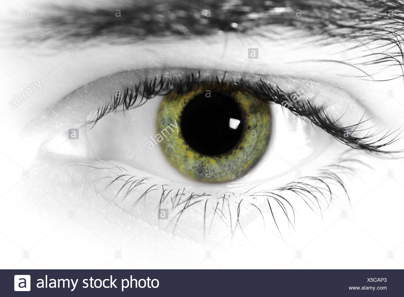 Close up of a mans eyes stock image