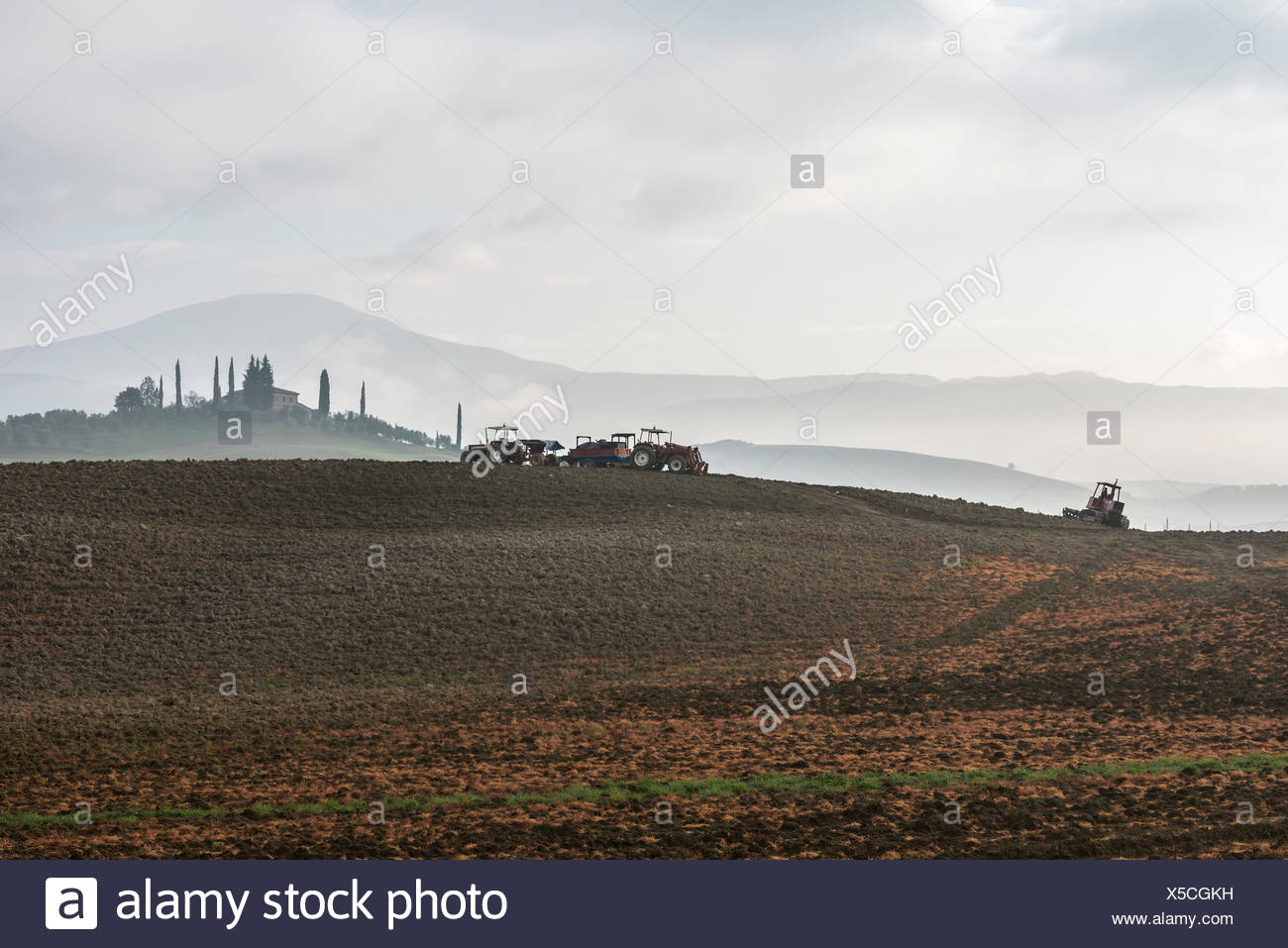 Italy, Tuscany, Castiglione D'orcia, Tractors on gray plowed land and distant cypress trees around villa disappearing in fog - Stock Image