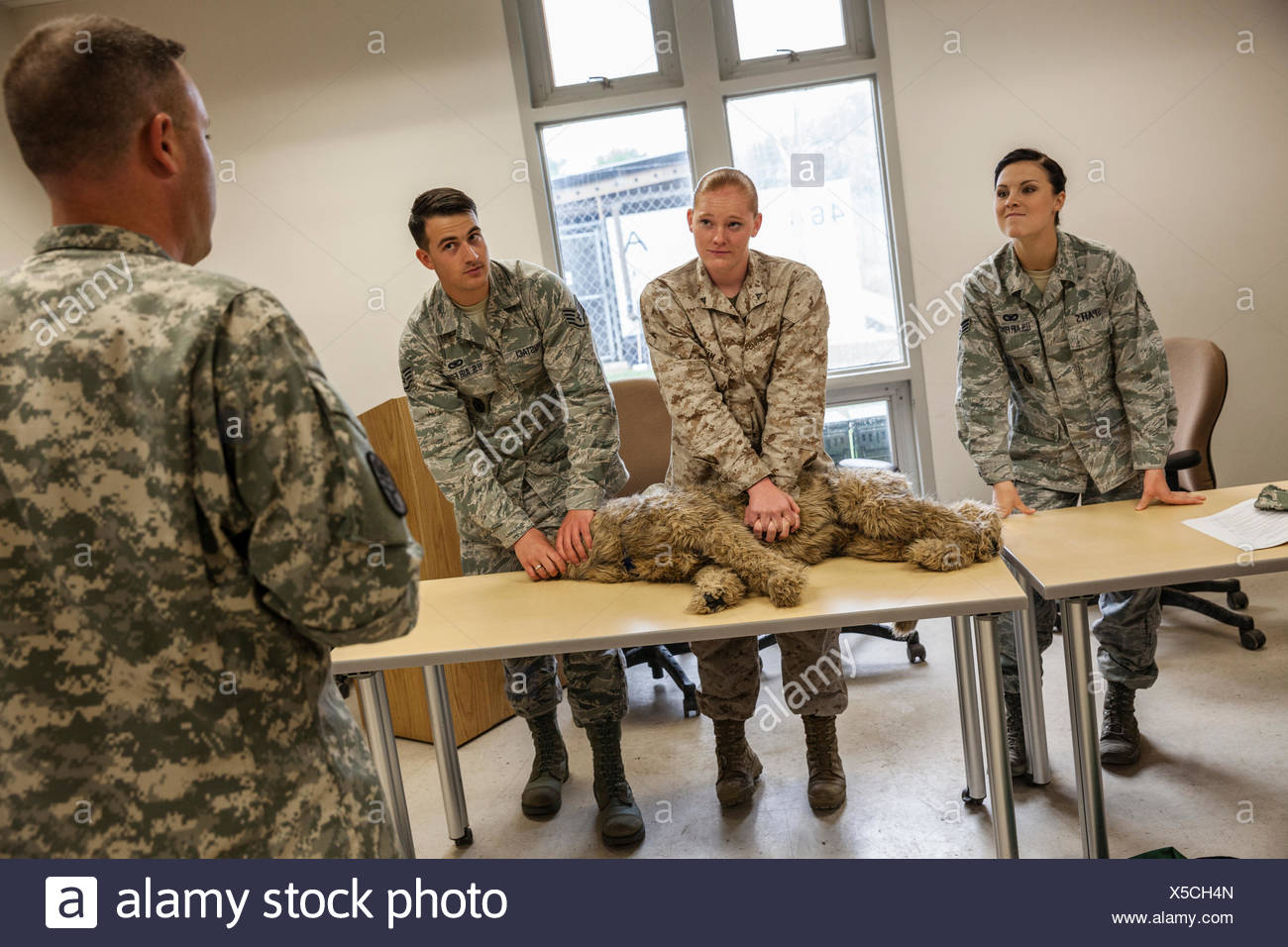 Military students learn cardio pulmonary resuscitation for military working dogs as part of a first aid class. - Stock Image