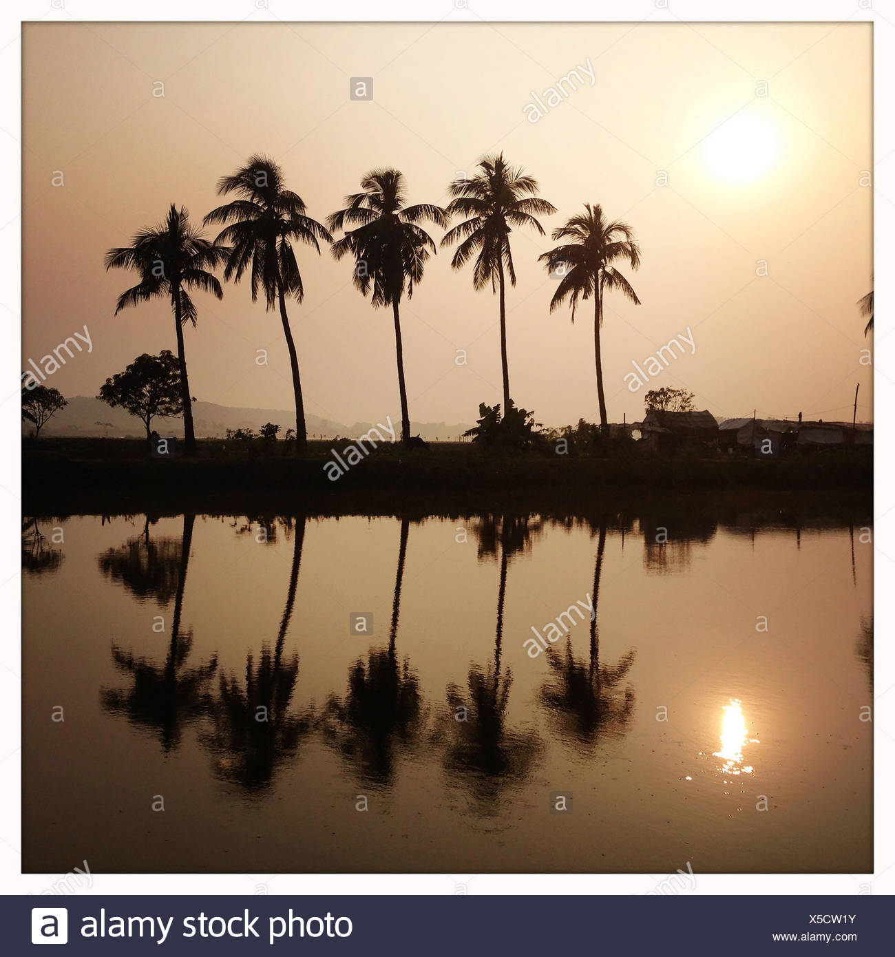 A series of palm trees stands next to wetlands in Kolkata. - Stock Image