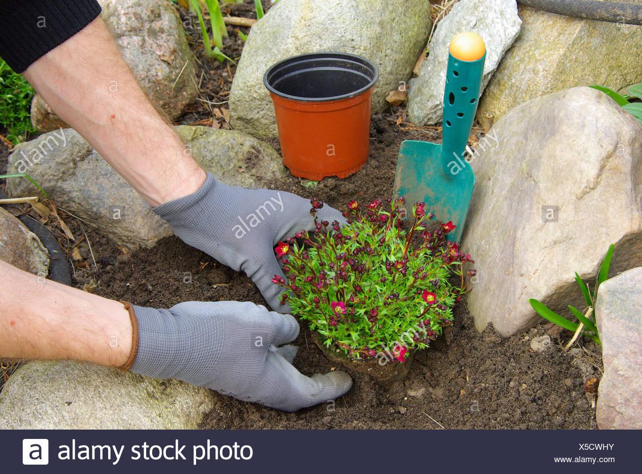 hand plant flower Stock Photo