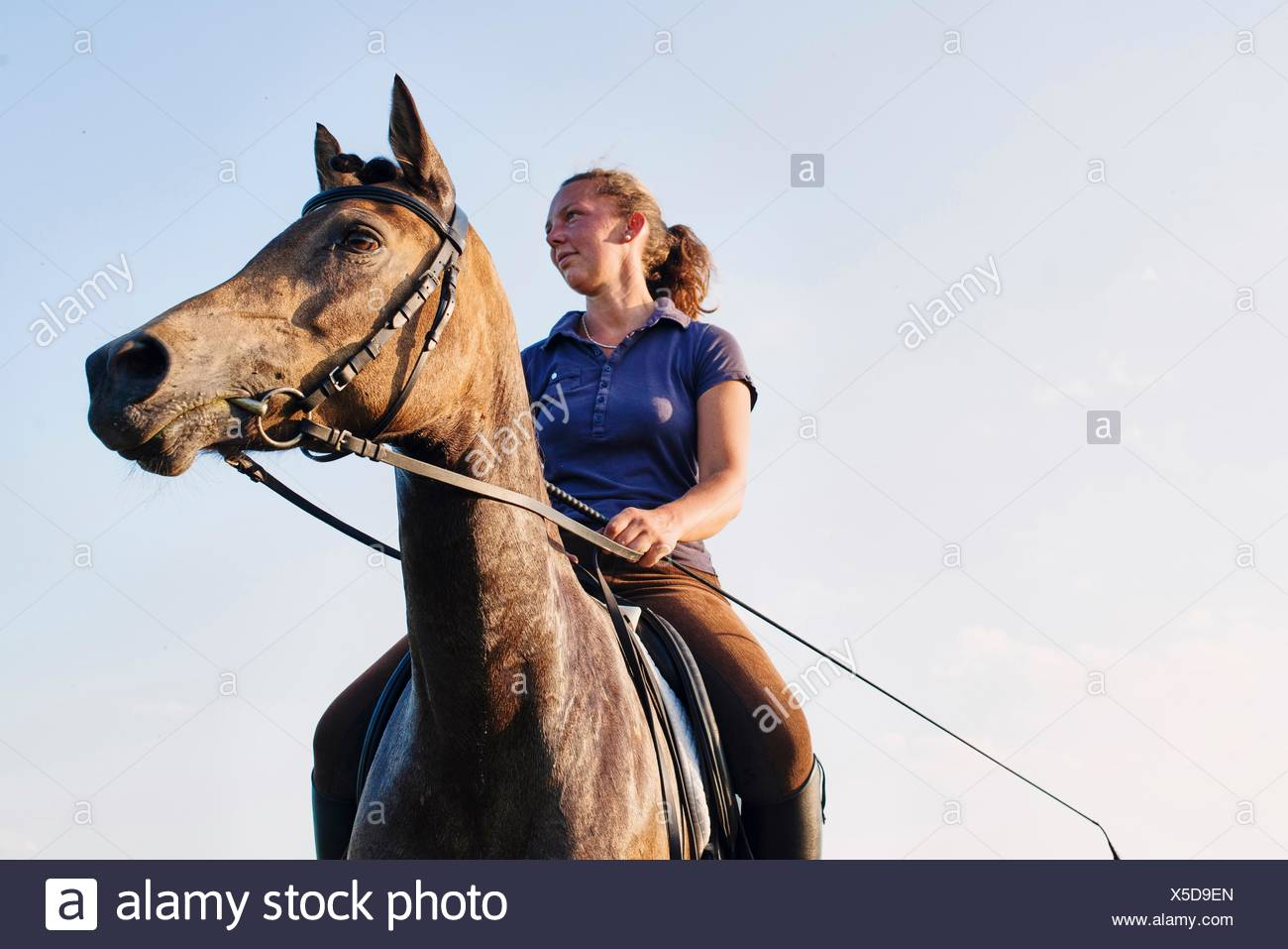 Low angle view of woman riding bay horse against blue sky - Stock Image