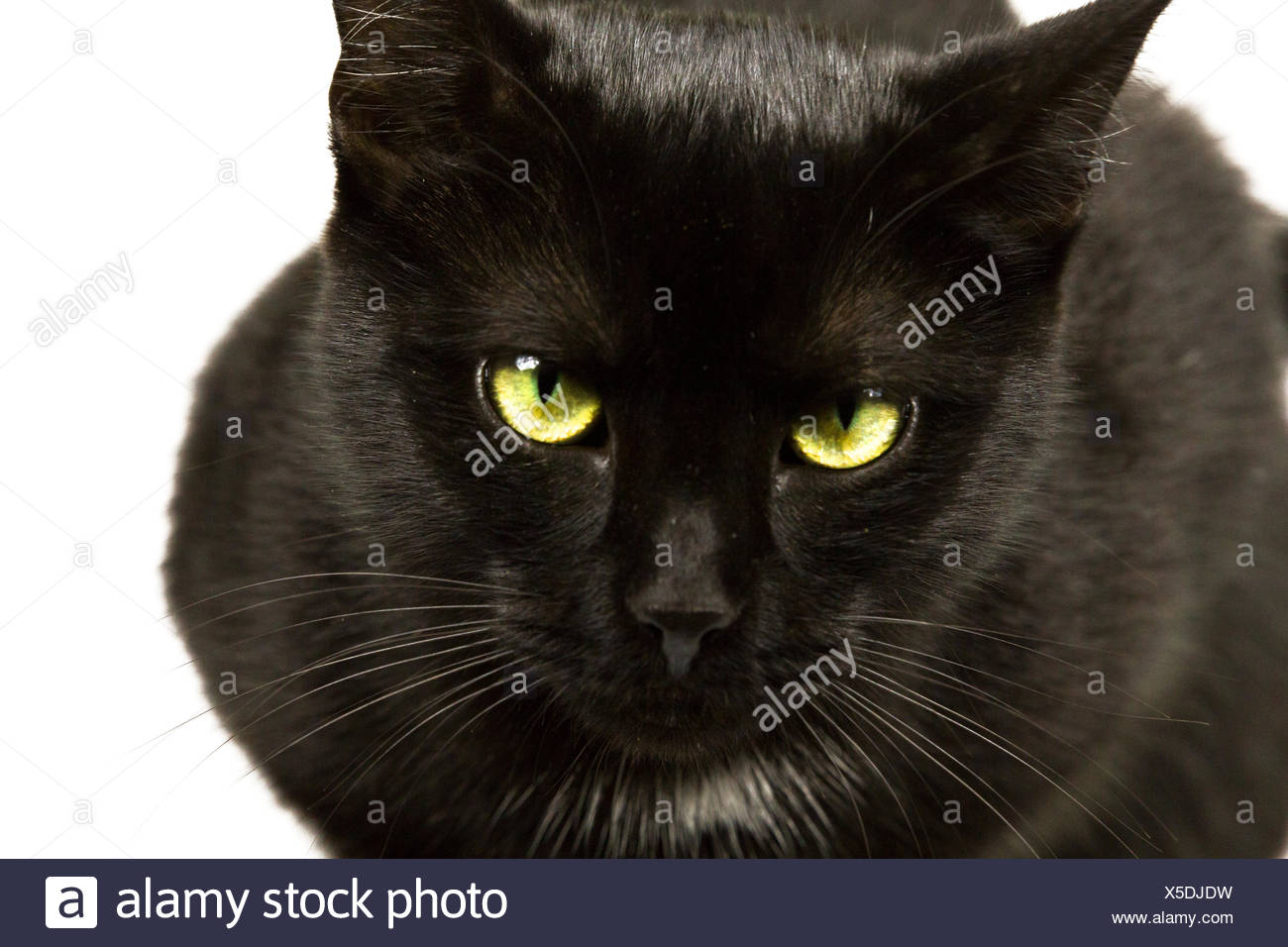 Black cat eyes 5 - Stock Image