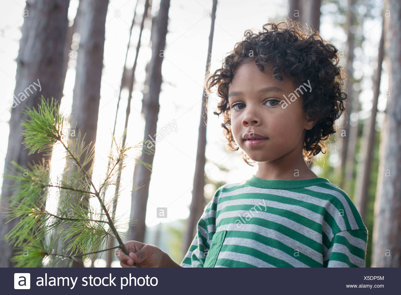 Trees on the shores of a lake. A child standing among the trees, holding a branch with yellow pine needles. - Stock Image