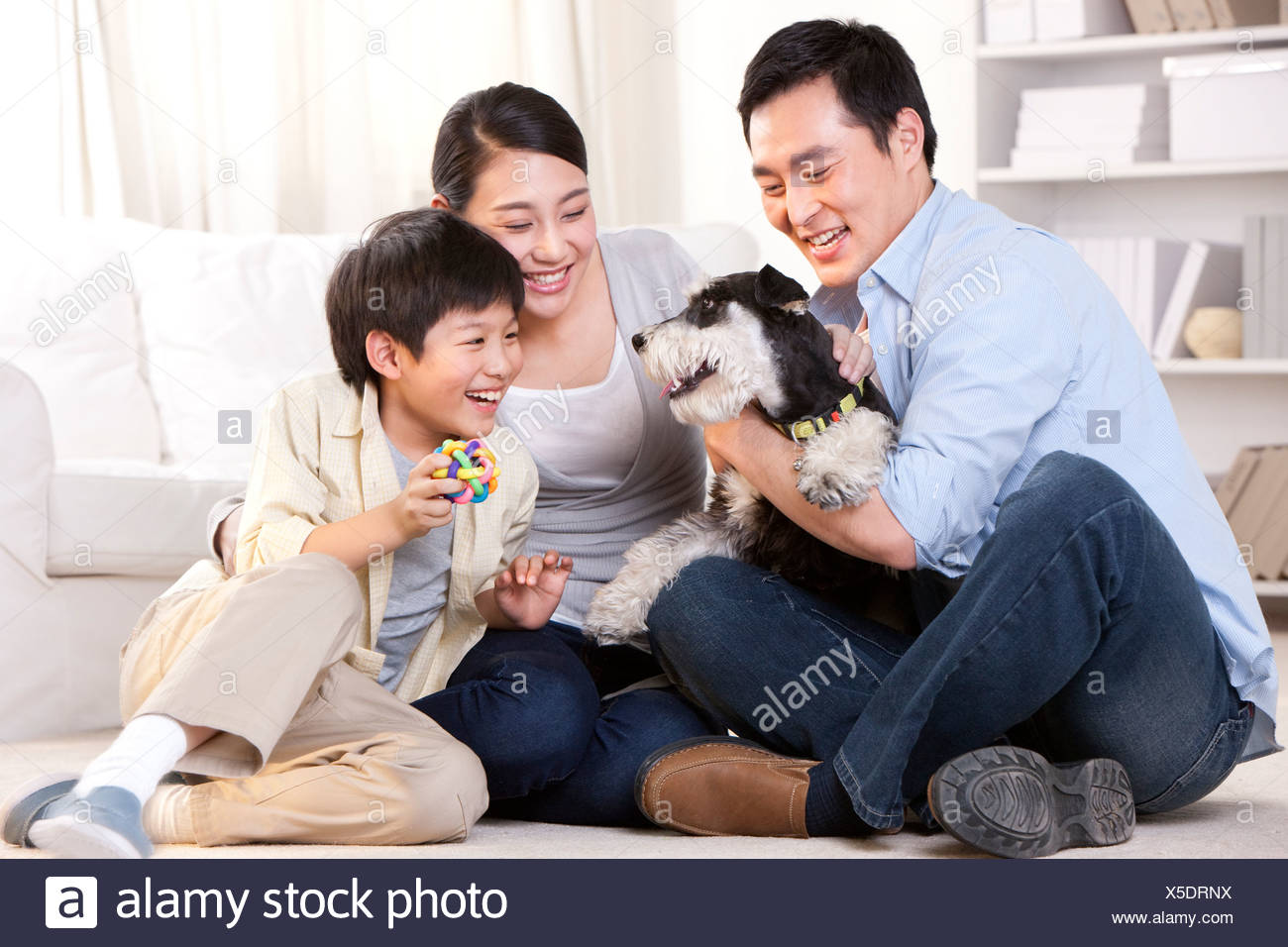 Family playing with a pet Schnauzer - Stock Image
