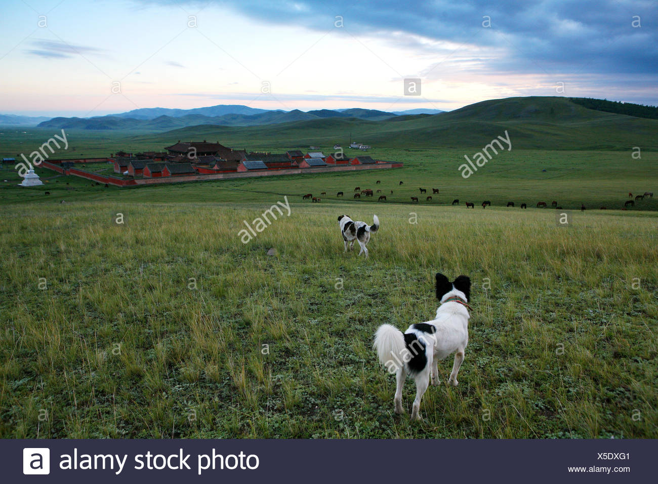 The Amarbayasgalant monastery in the northern Mongolia, Selenge province Stock Photo