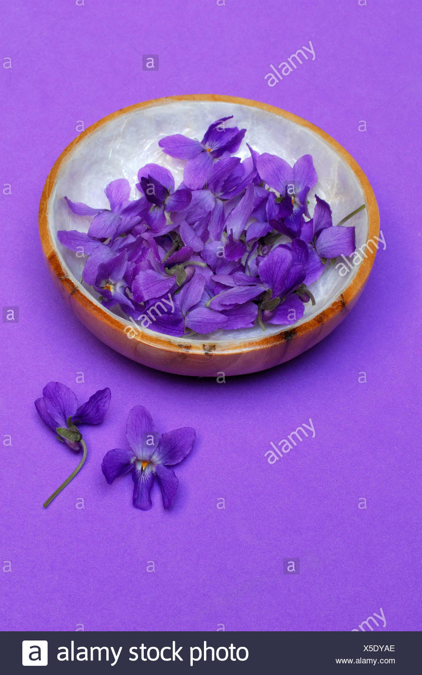 Sweet Violet - Stock Image