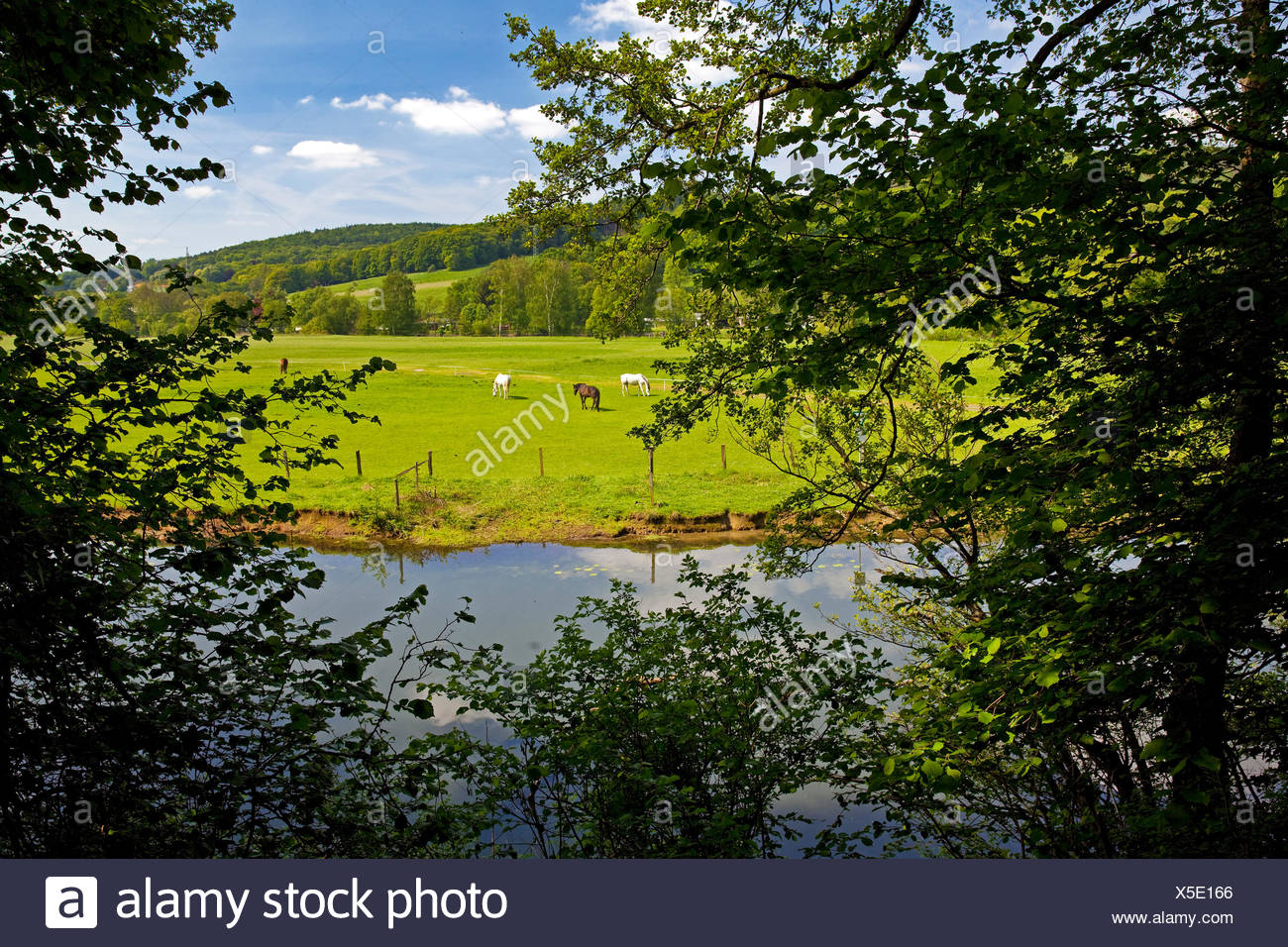flood plain of Ruhr river with paddock, Germany, North Rhine-Westphalia, Ruhr Area, Witten - Stock Image