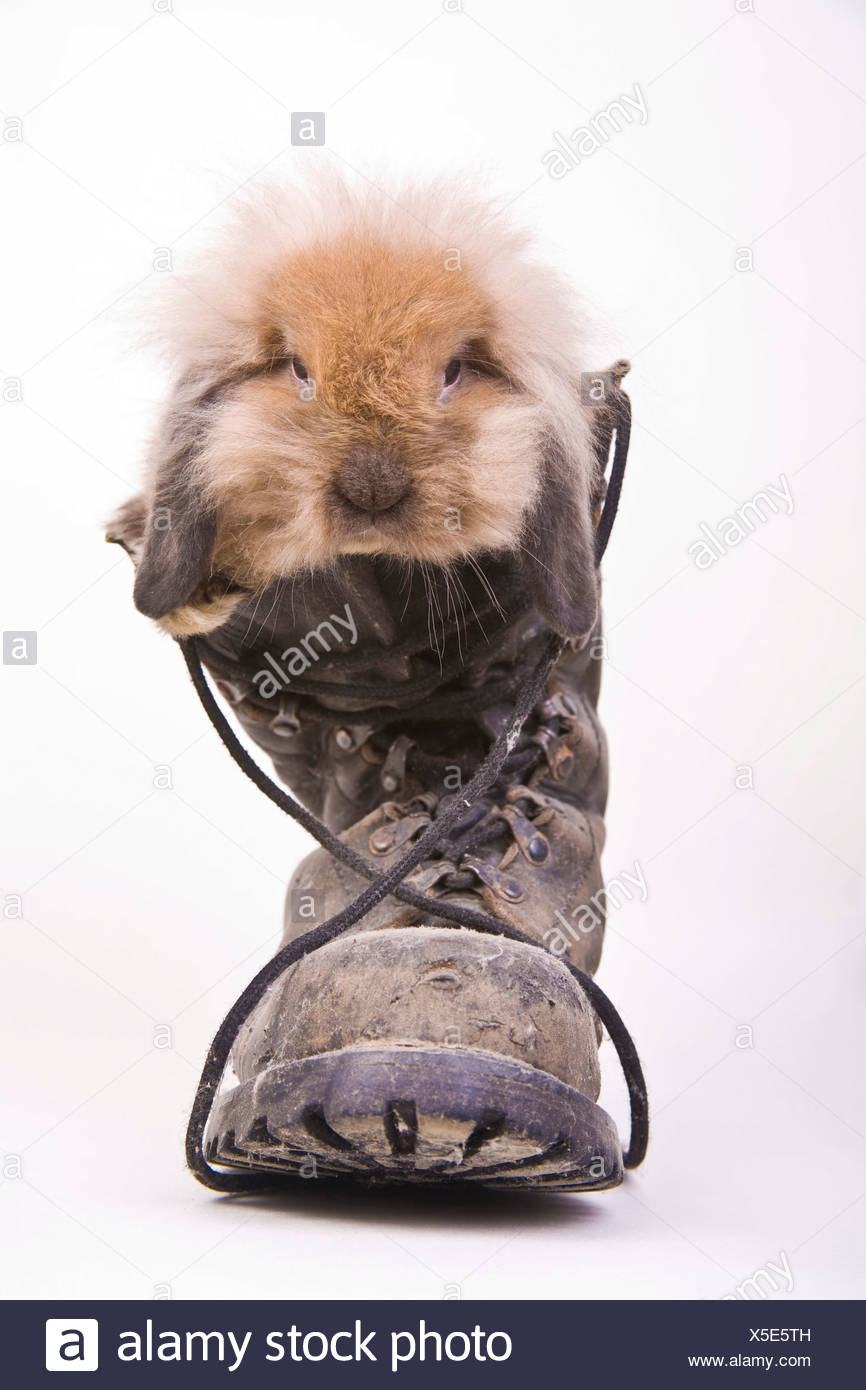 Rabbit in a boot - Stock Image