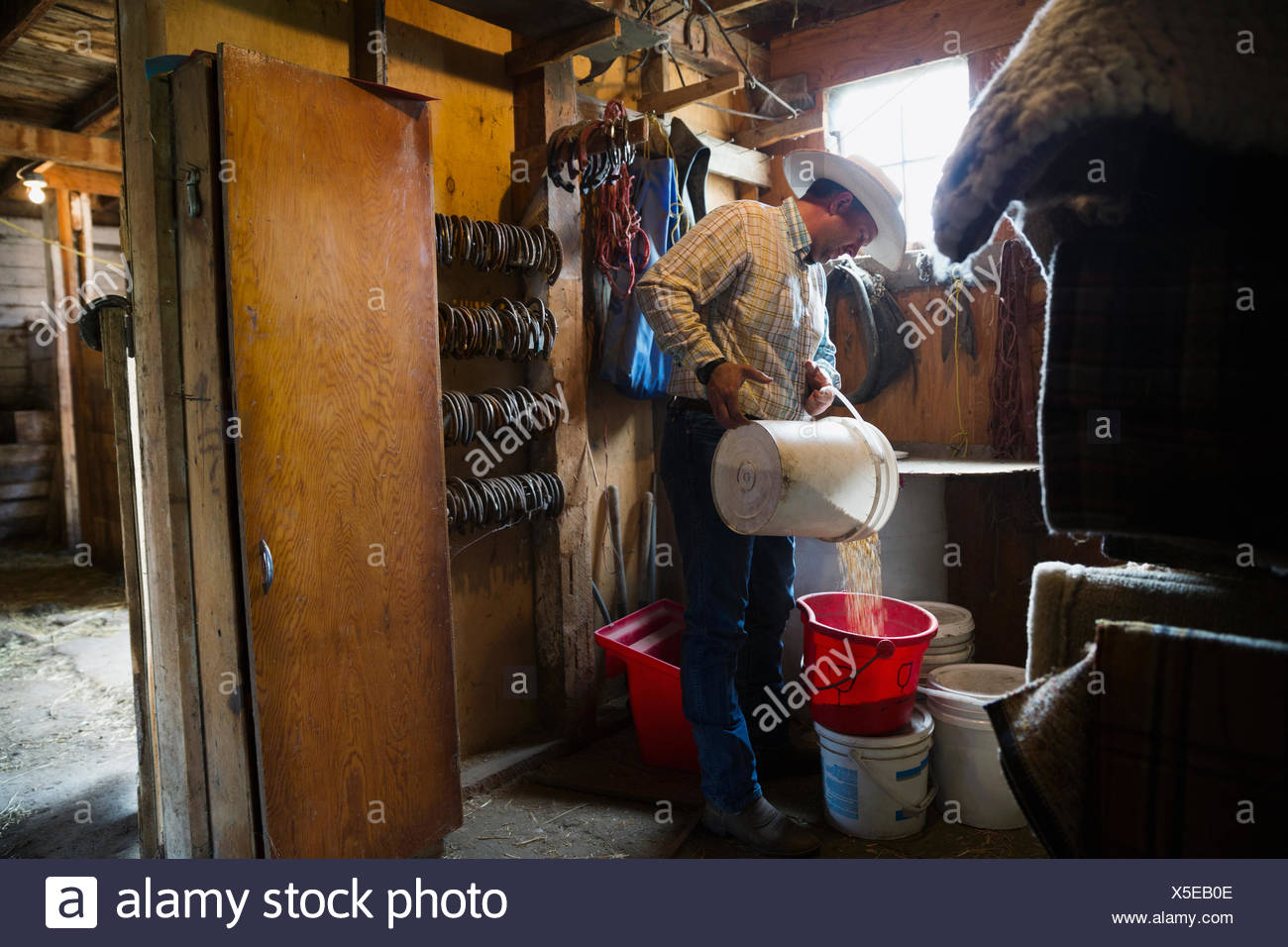 Rancher filling bucket with grains in barn - Stock Image