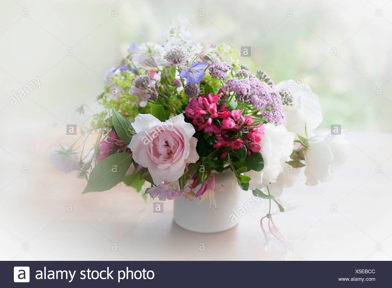 Rose Escallonia Yarrow And Astrantia Bunch Of Cottage Garden