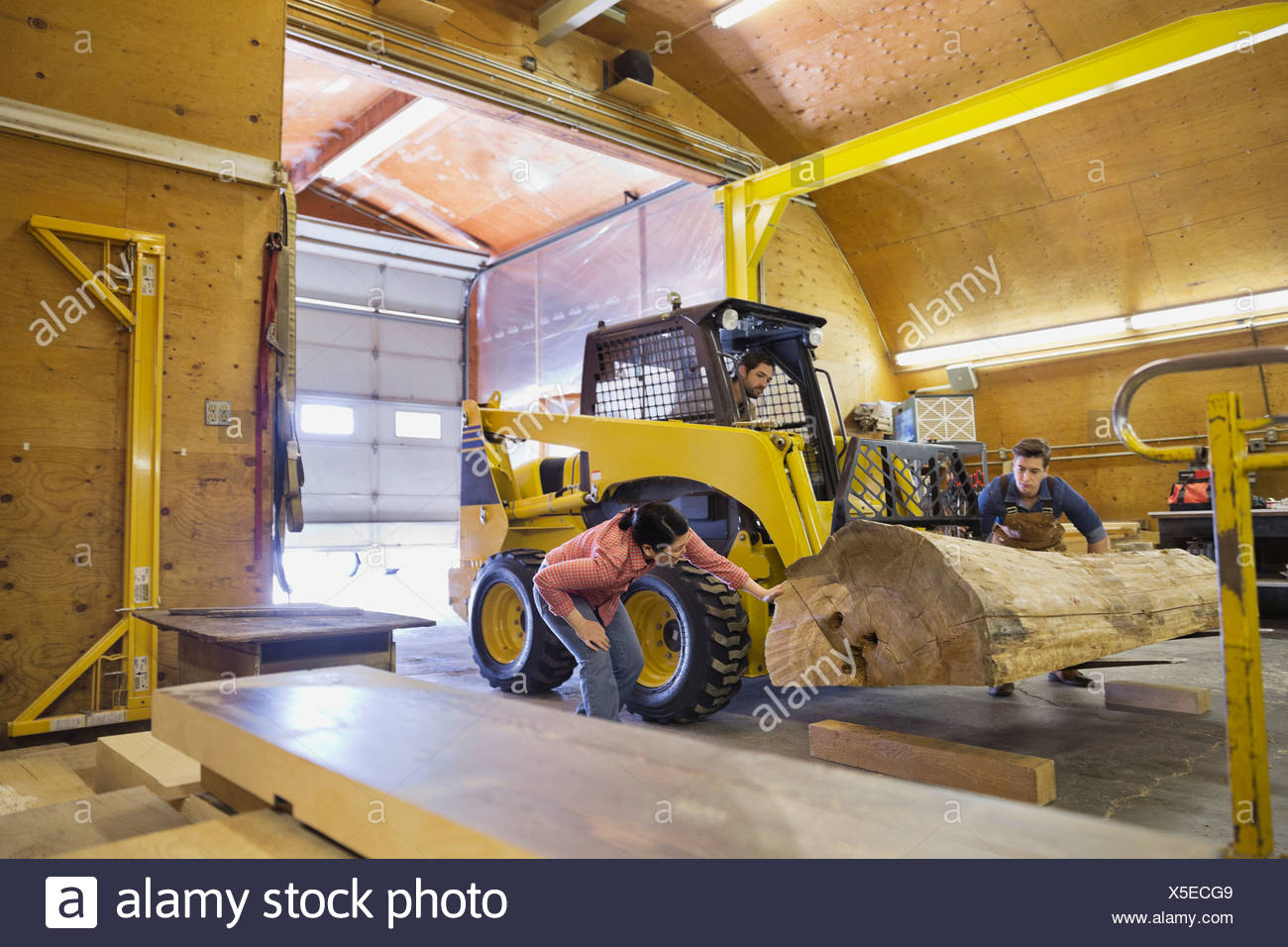 Woodworkers using forklift to move log into workshop - Stock Image