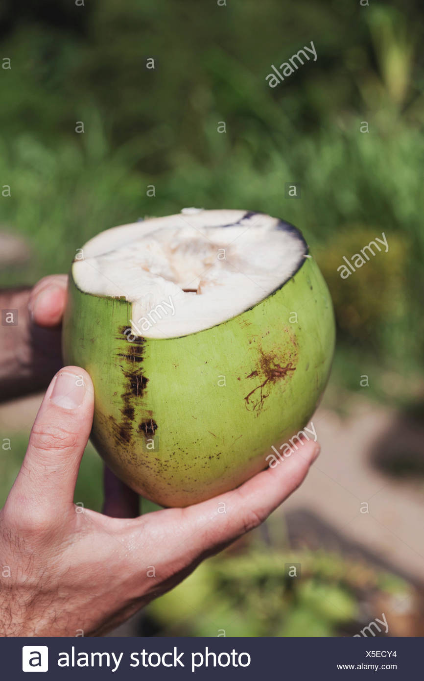 Green young coconut in man's hands - Stock Image