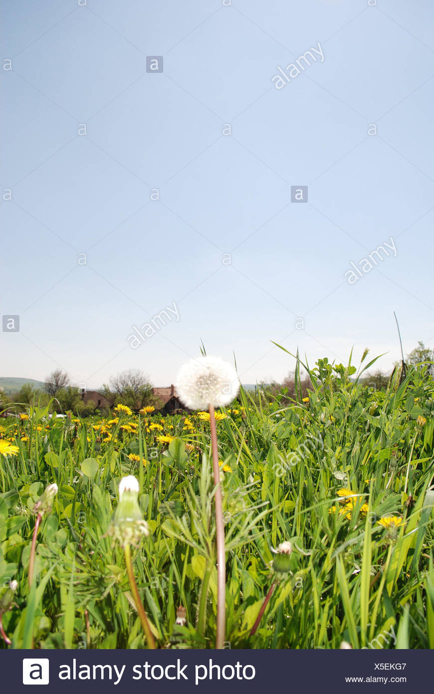 Evanescence Stock Photos Evanescence Stock Images Page 2 Alamy