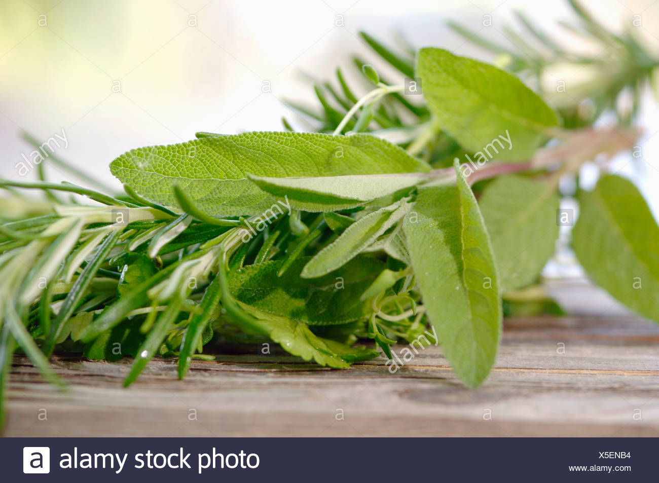 Sage and rosmary, close-up - Stock Image