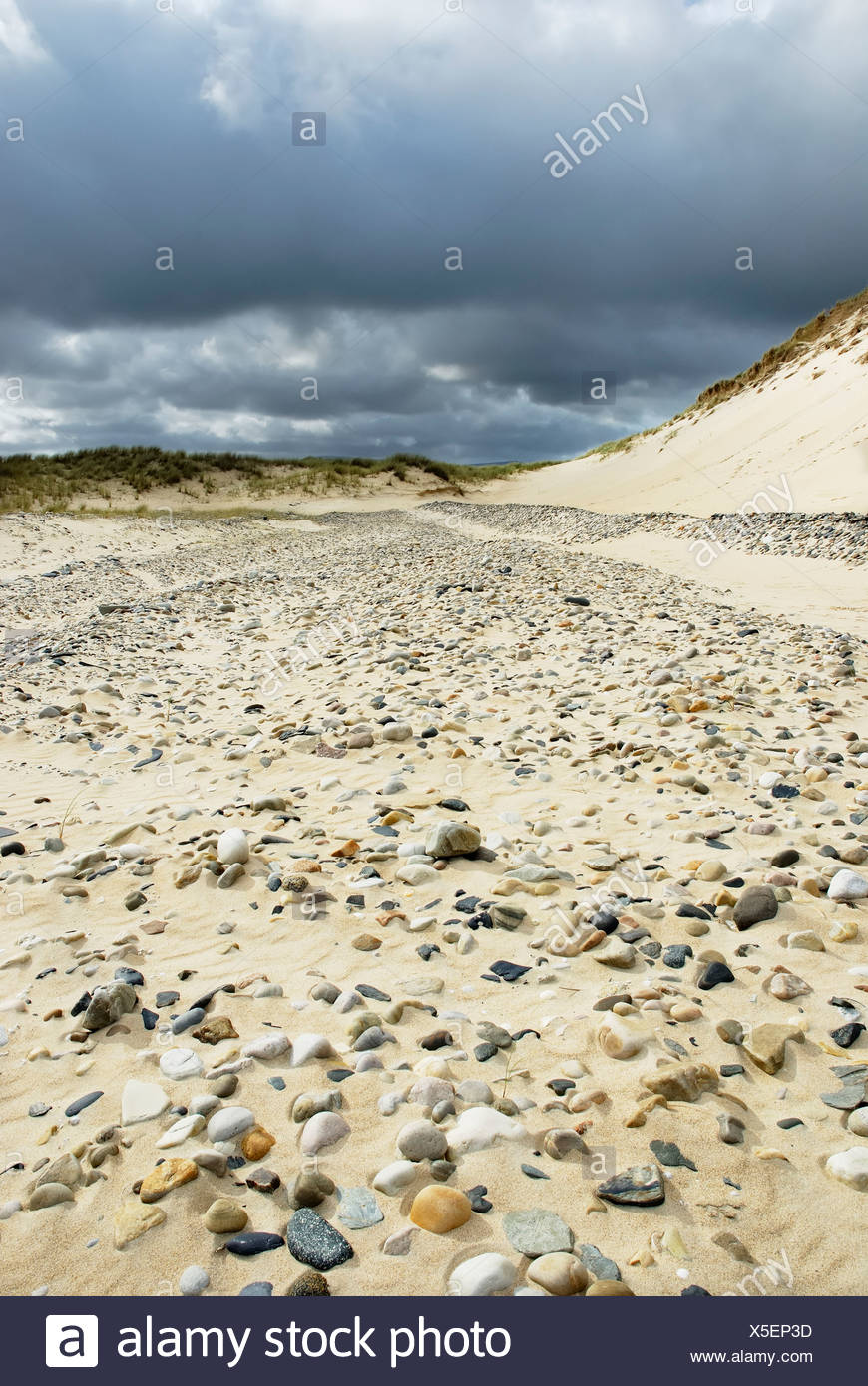 Polished pebbles of different geological origin representing recent coastline liberated by steady blowing wind in a sand dune o - Stock Image