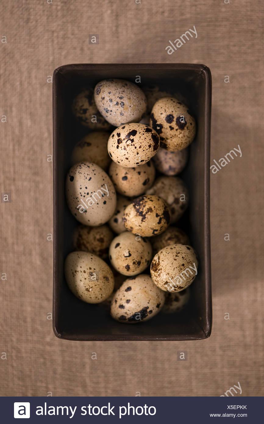 Multiple quail eggs in antique metal baking tin. Burlap linen background. - Stock Image