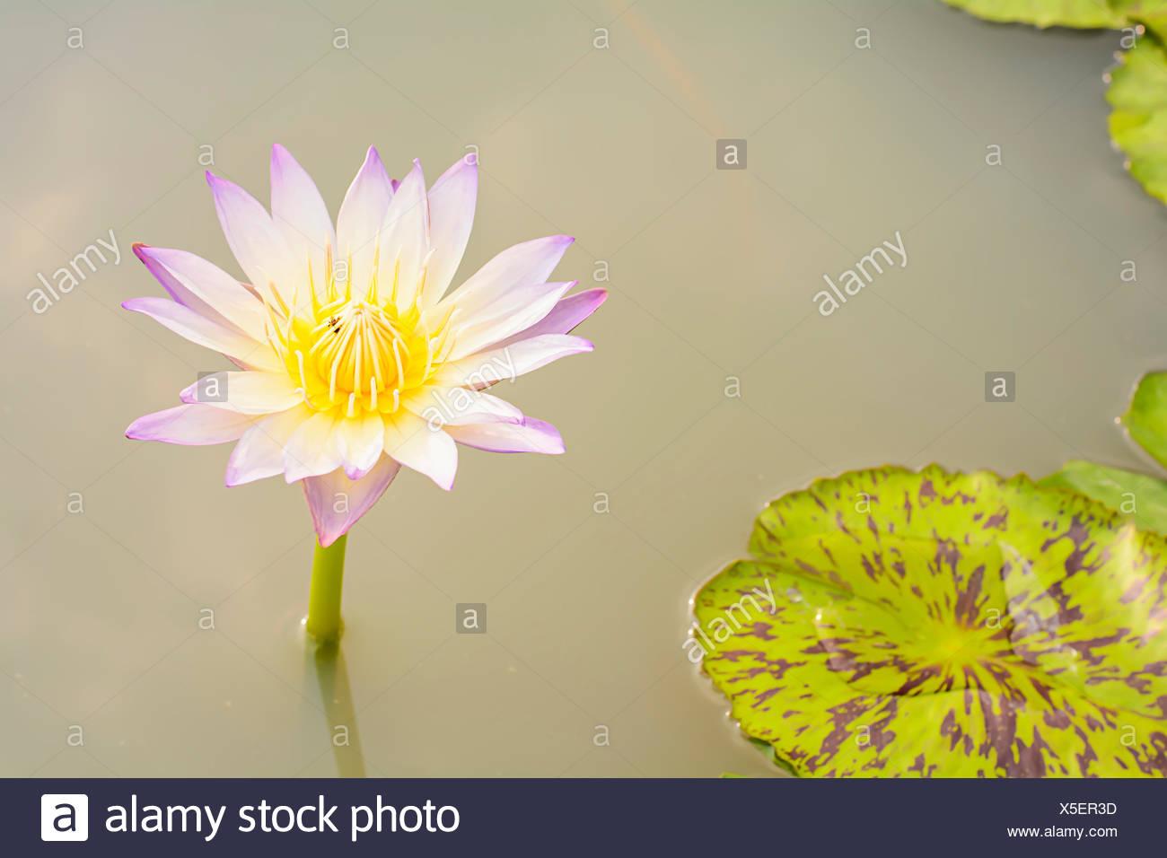 Buddhism Lotus Garden Zen Stock Photos