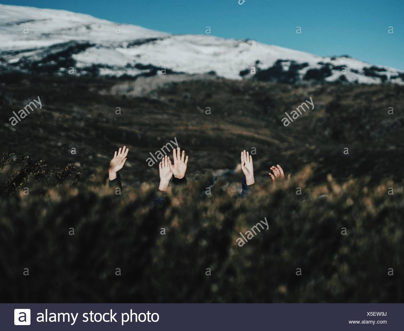 Hands Coming Out From Field Against Snowcapped Mountains - Stock Image