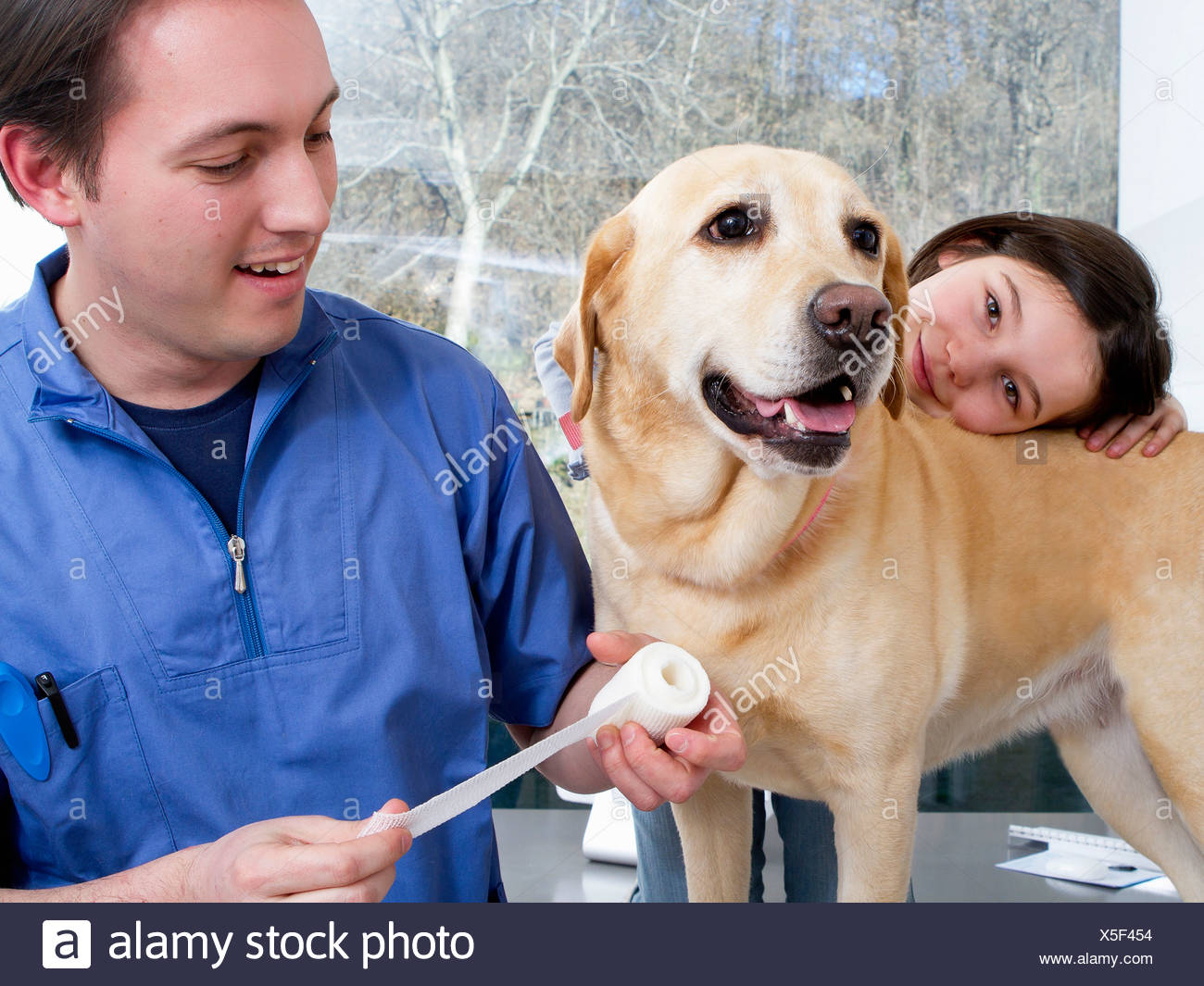 Vet working with girl and her dog - Stock Image