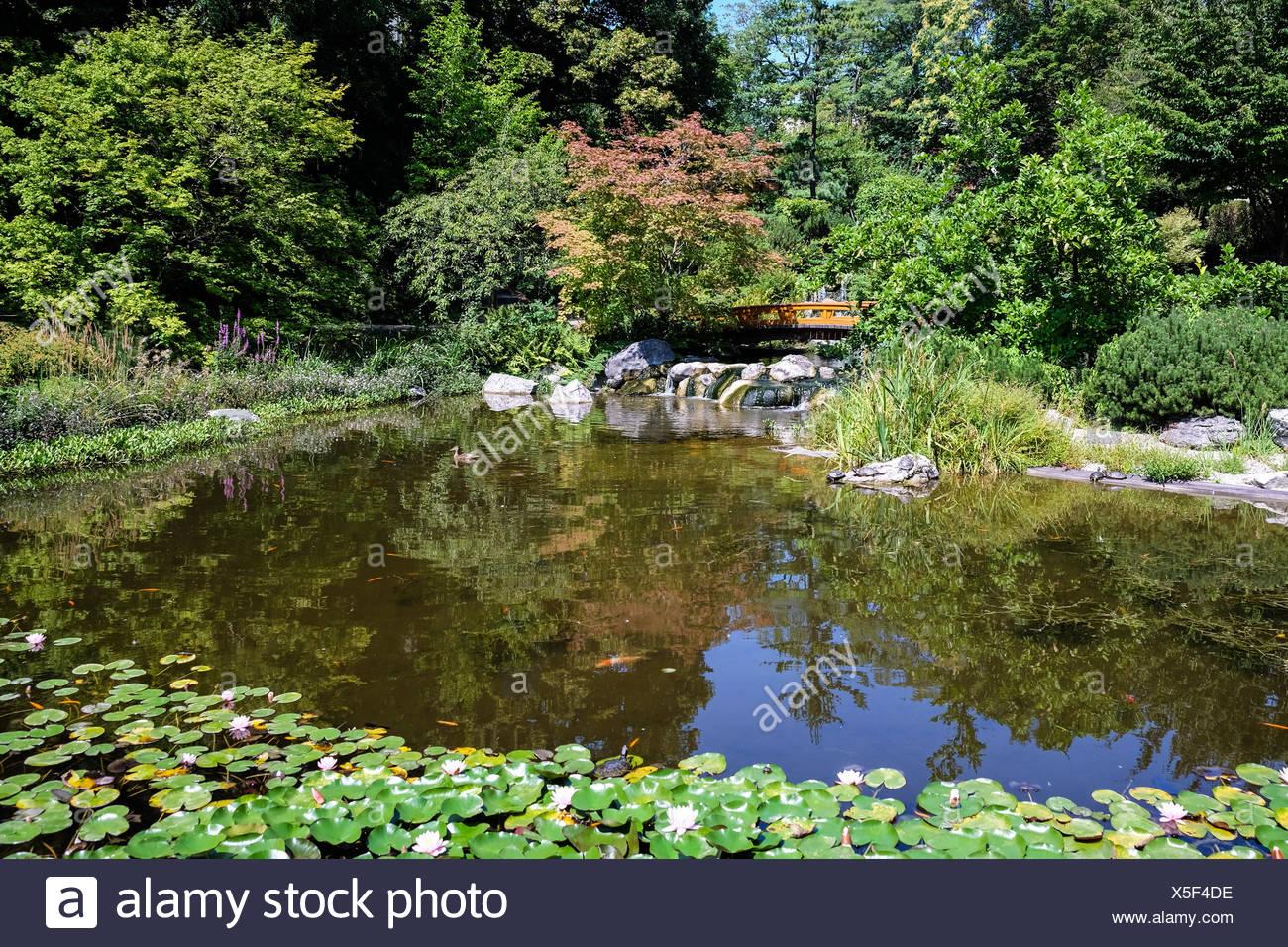Japanischer Garten, Landschaft Mit Teich Und Pflanzen