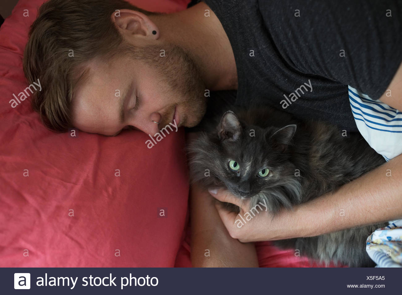 Man sleeping with cat in bed - Stock Image