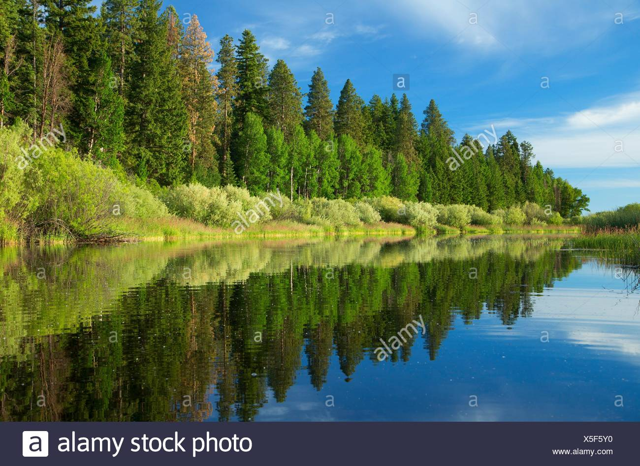 Forest reflection along Upper Klamath Canoe Trail, Winema National Forest, Volcanic Legacy Scenic Byway, Oregon. - Stock Image