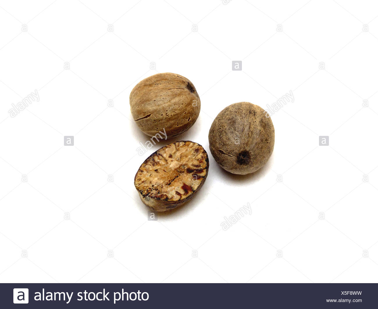 Muskat Nutmeg Myristica Fragrans Stock Photo Alamy