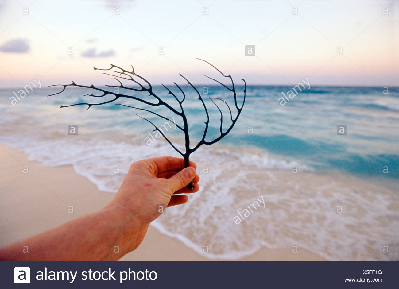 Hand Holding Branch on Beach, Tulum, Mexico - Stock Image