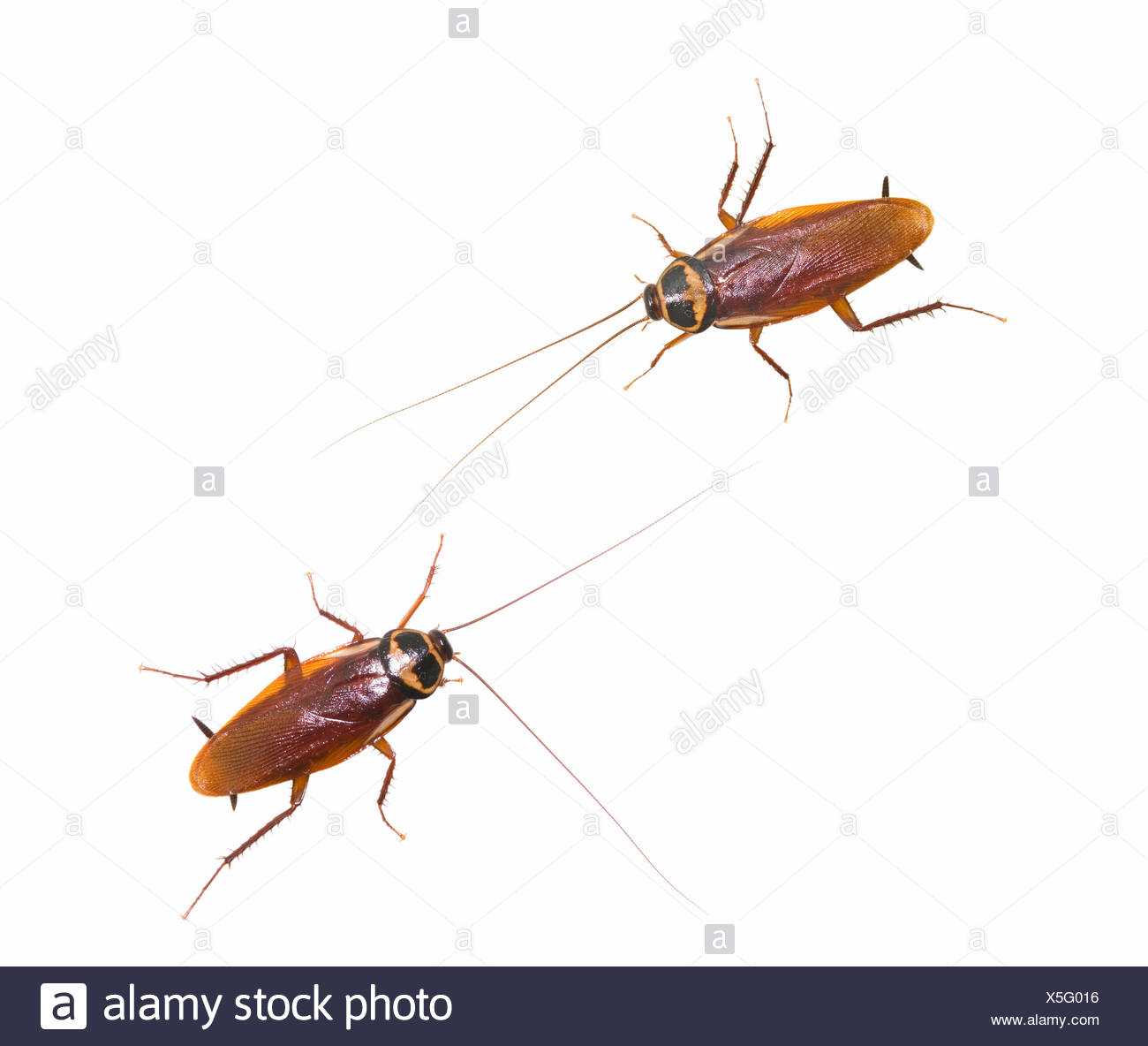 Roach Back Insect Pest Stock Photos & Roach Back Insect Pest Stock ...