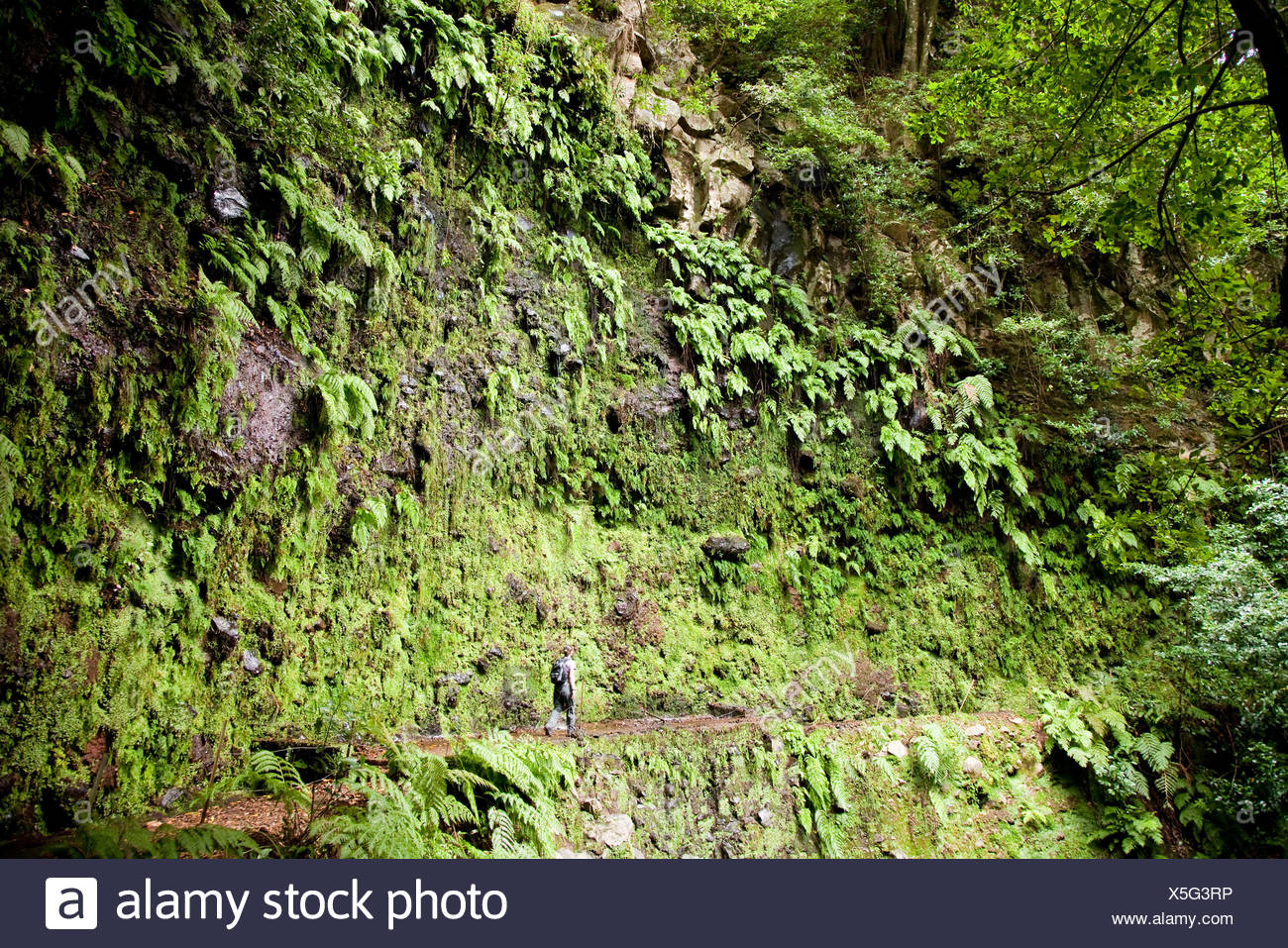 Hiker at the irrigation canal Levada de Janela, in Ribeira da Janela, Madeira, Portugal, Europe - Stock Image