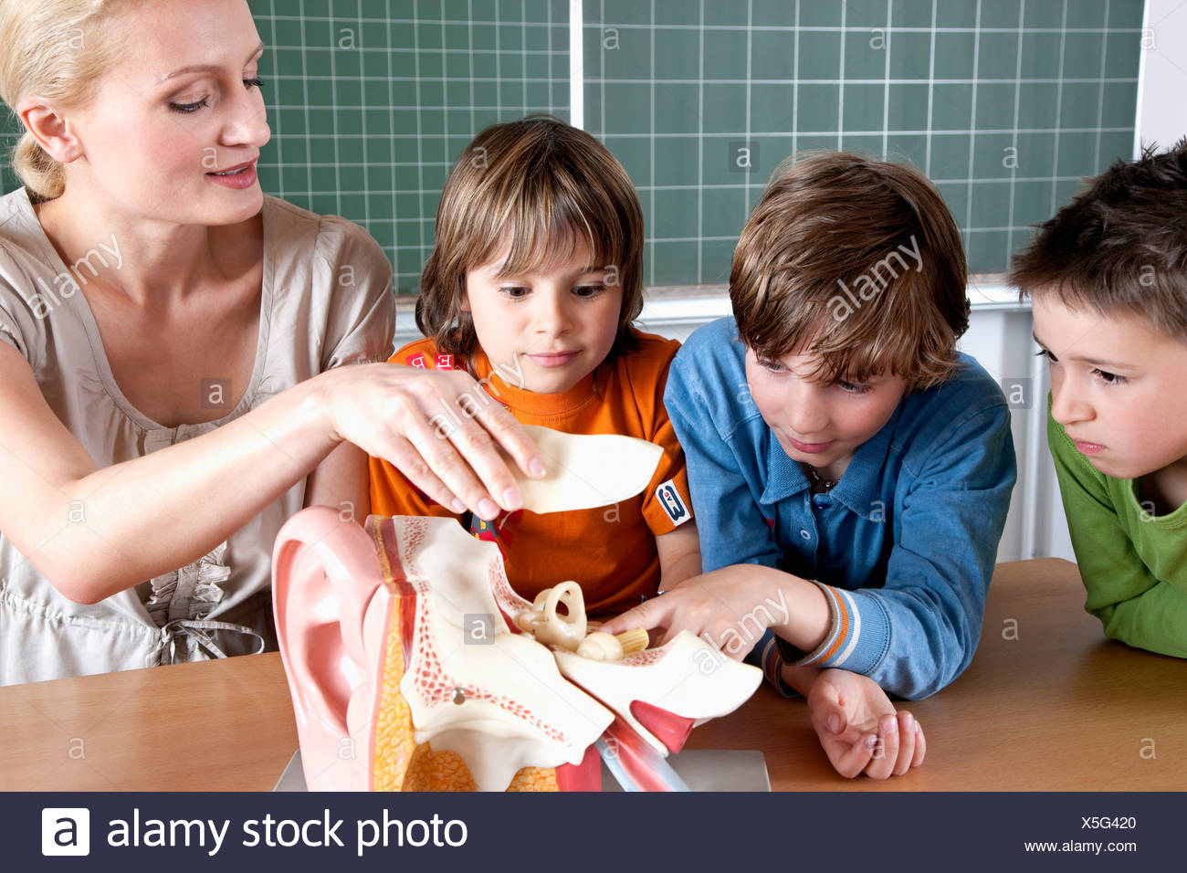 teacher demonstrating model of human body to three pupils - Stock Image
