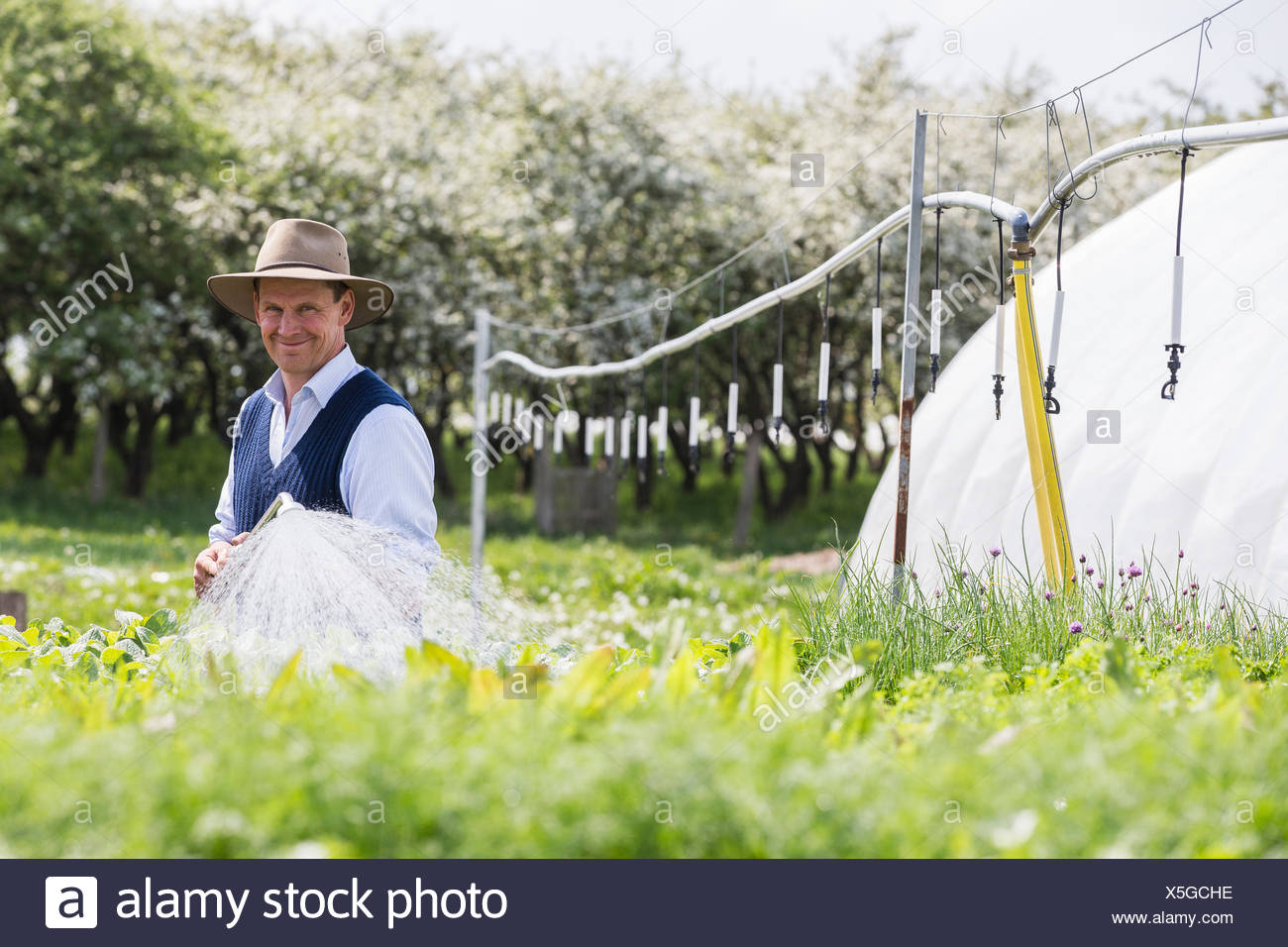 Farmer watering plants with hosepipe - Stock Image