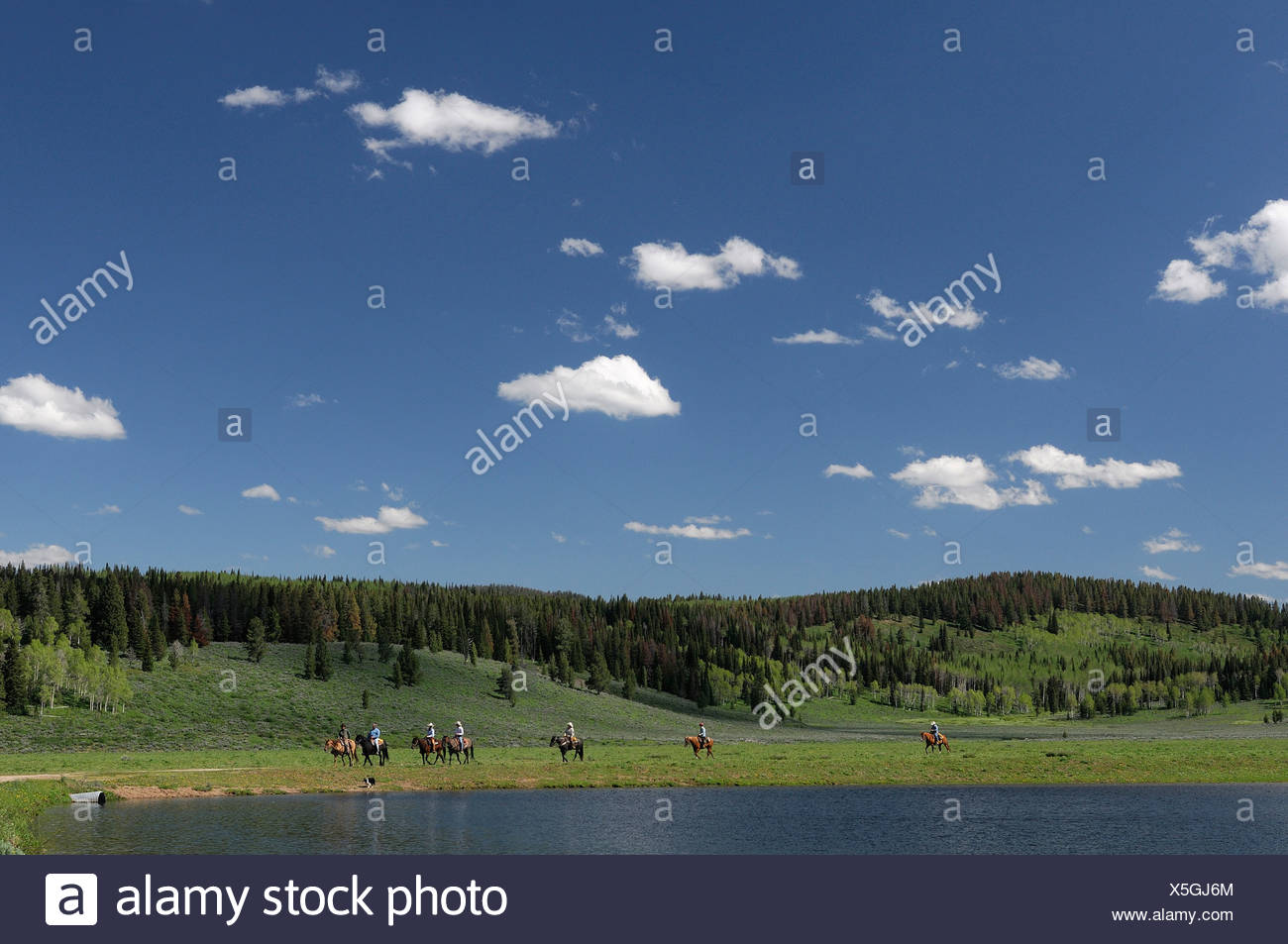 Guest's Horseback riding Flying A Ranch Guest Ranch Bondurant Wyoming USA hills forest Stock Photo