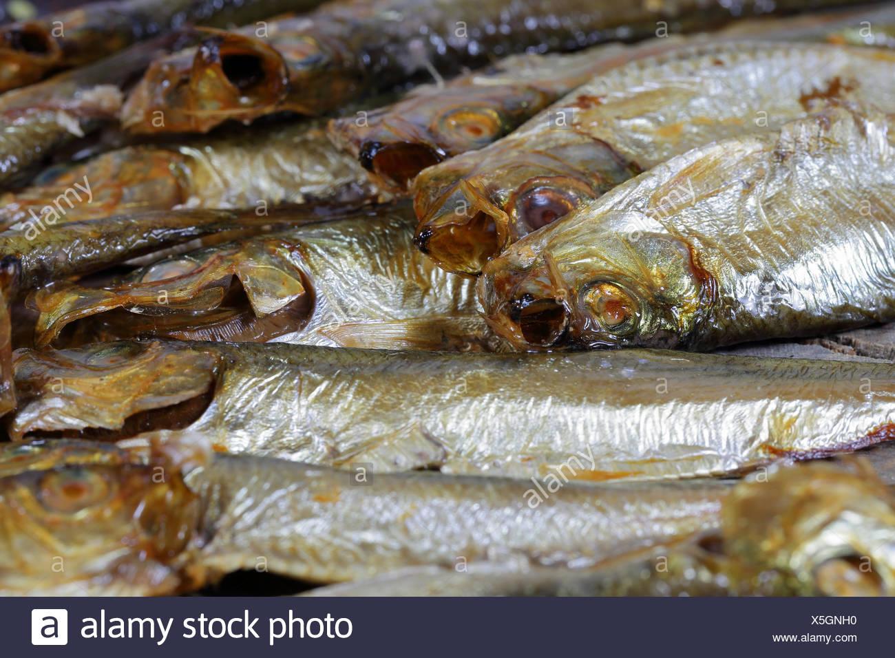 Smoked Kiel sprats - Stock Image