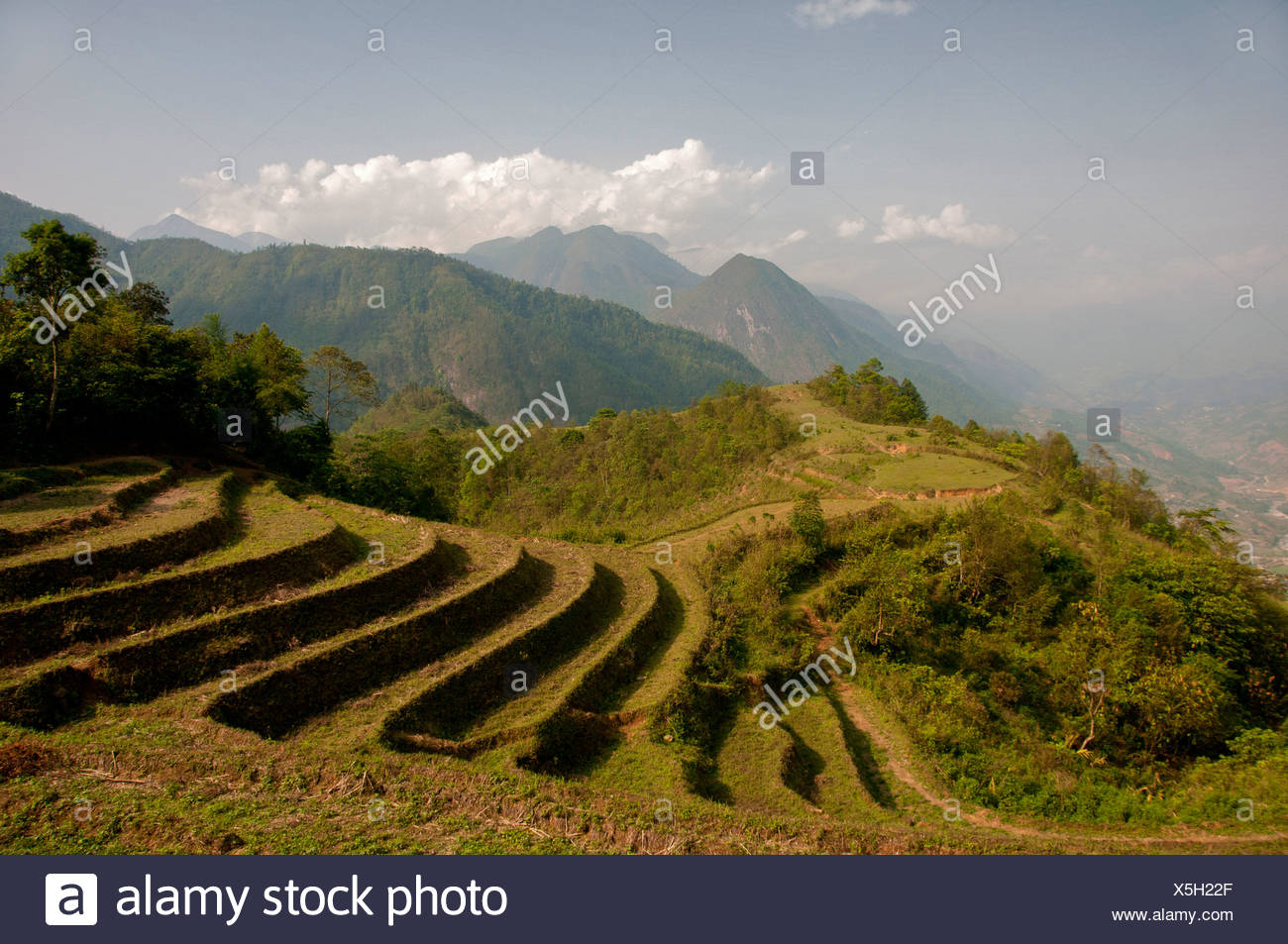 Rice field, terracing, Sapa, Northern Vietnam, Vietnam, Asia, rice, agriculture, landscape - Stock Image