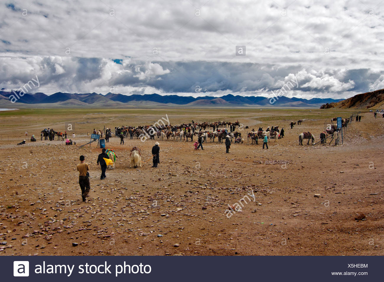 Tibetans with Yaks and horses waitingfor tourists, at the Namtsho lake, Tibet, Asia - Stock Image